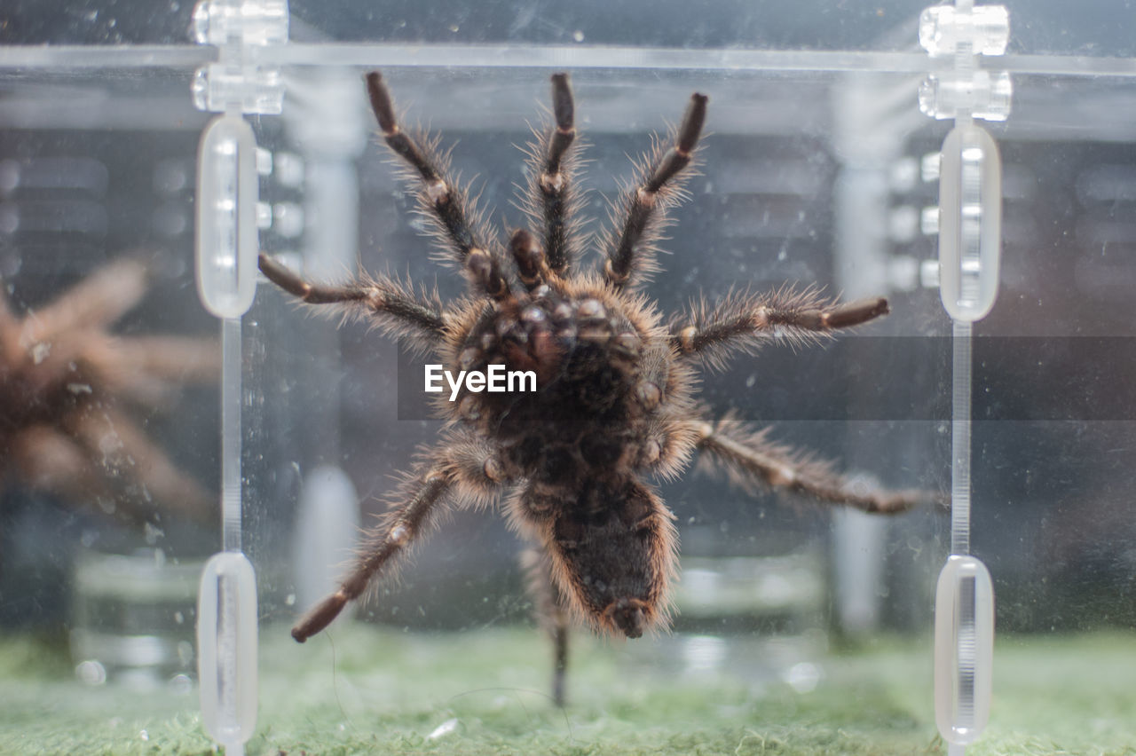 High angle view of spider on glass