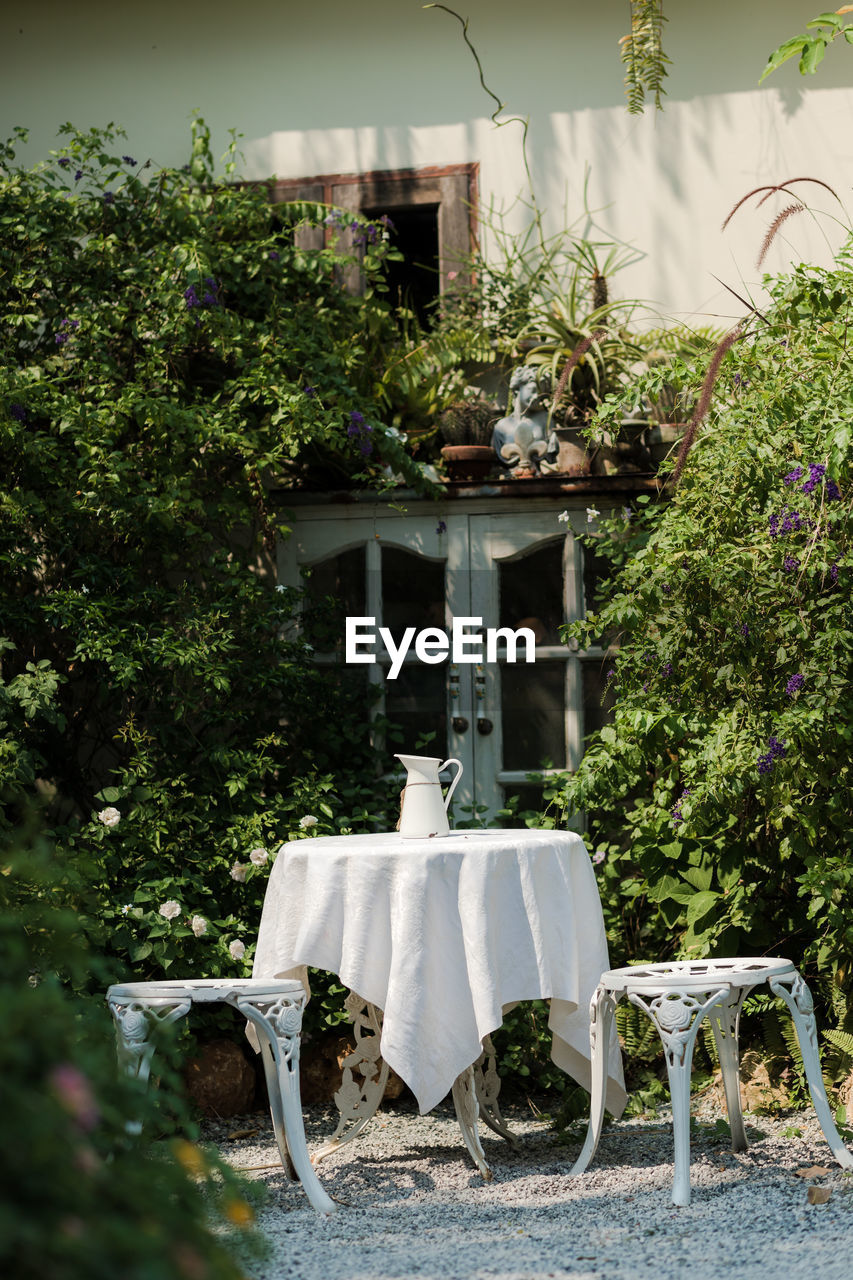 plant, tree, nature, seat, no people, day, chair, growth, table, front or back yard, outdoors, green color, focus on foreground, absence, potted plant, architecture, flower, flowering plant, sunlight, wedding