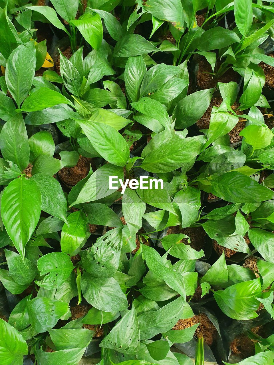 HIGH ANGLE VIEW OF LEAVES GROWING ON LAND