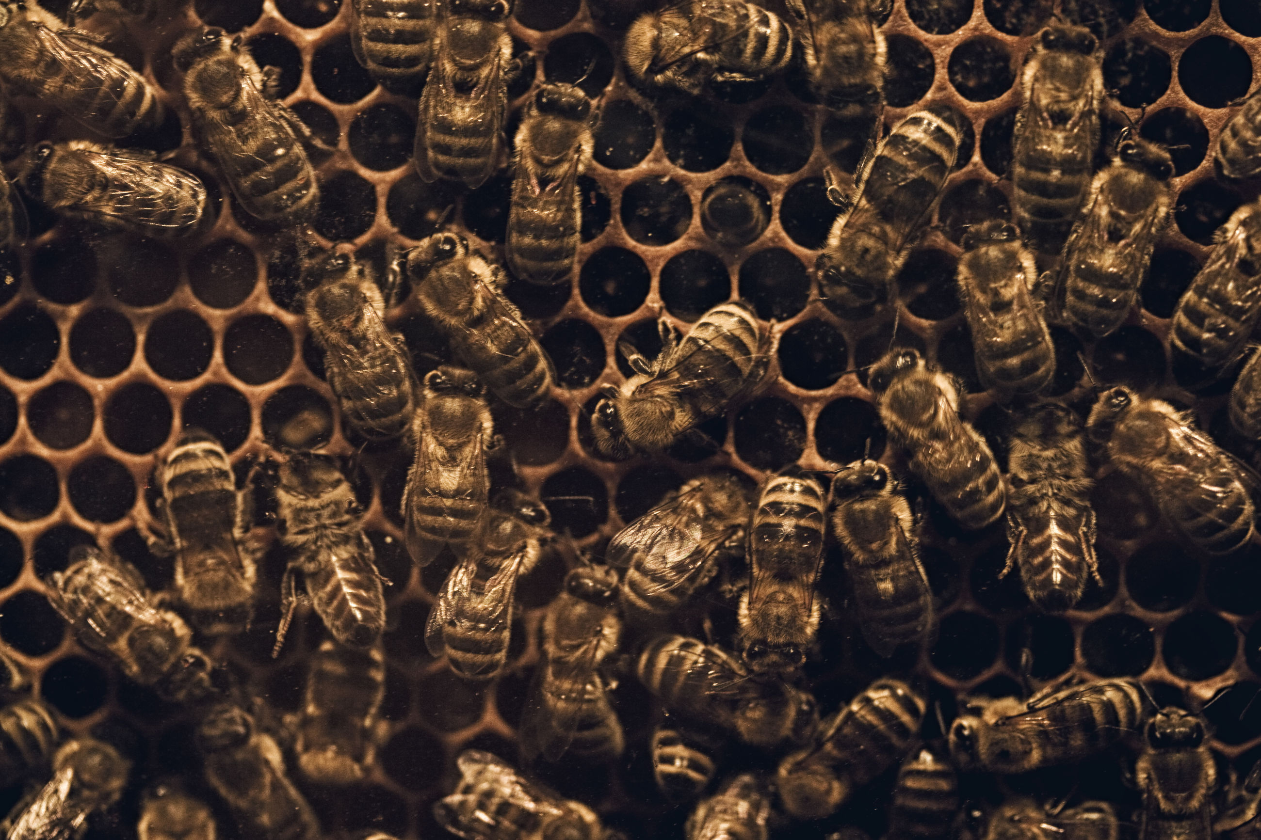 Close-up of bee on honeycomb