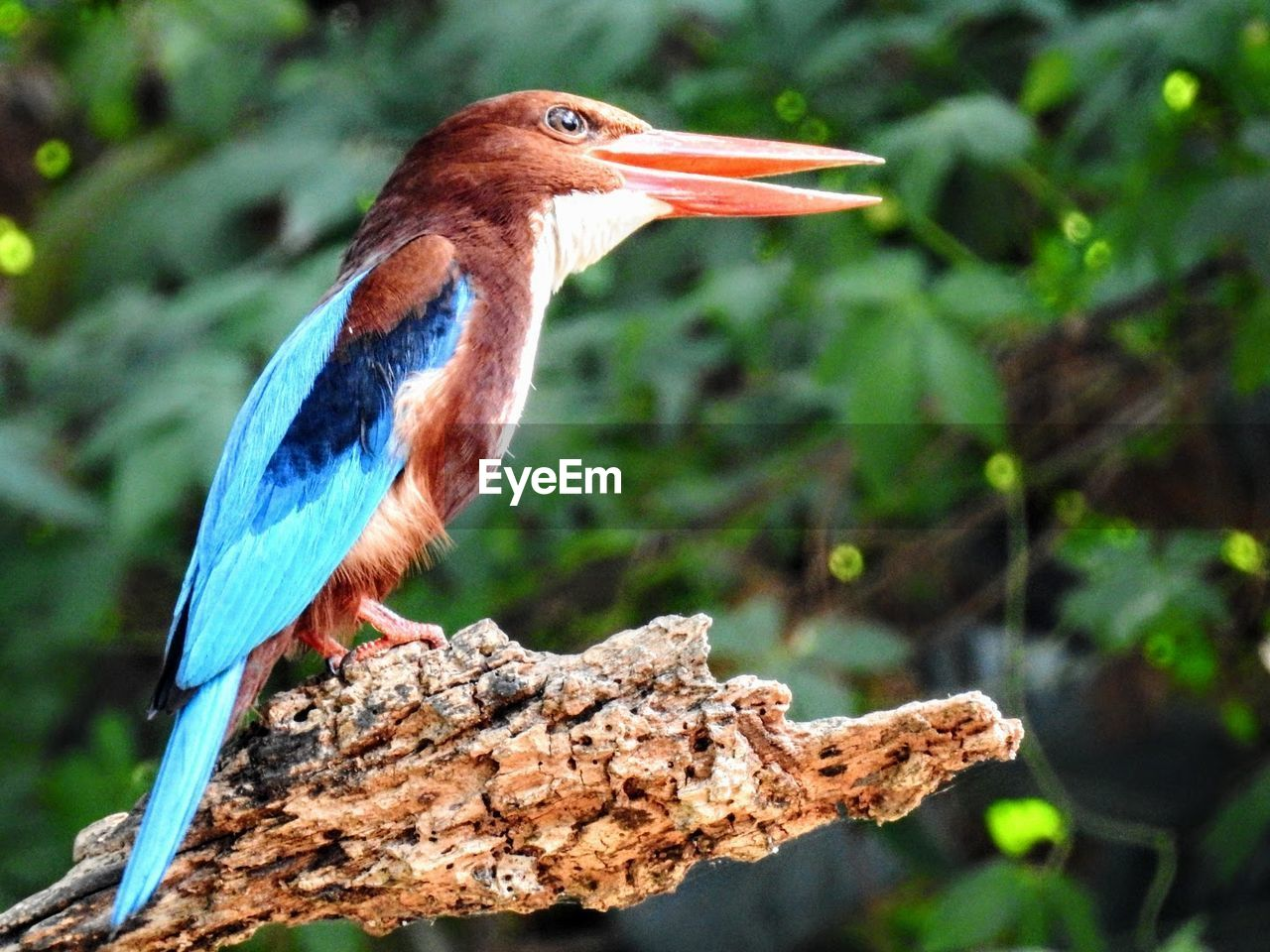 one animal, animals in the wild, animal themes, bird, animal wildlife, focus on foreground, perching, day, kingfisher, no people, nature, beak, close-up, outdoors, beauty in nature, tree