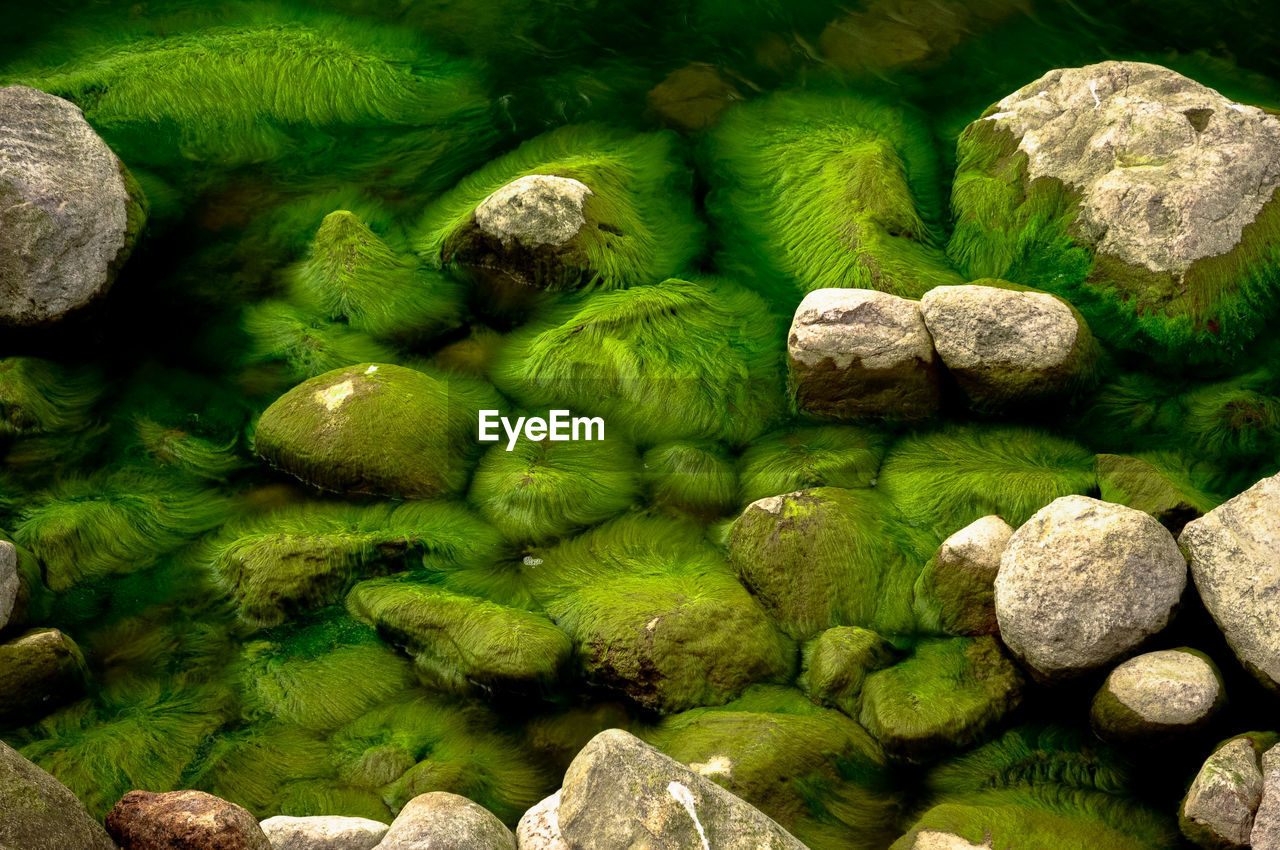 High angle view of moss growing on rocks in water
