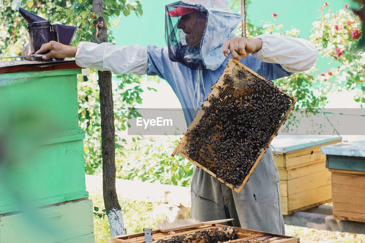 Beekeeper Holding Beehive Tray