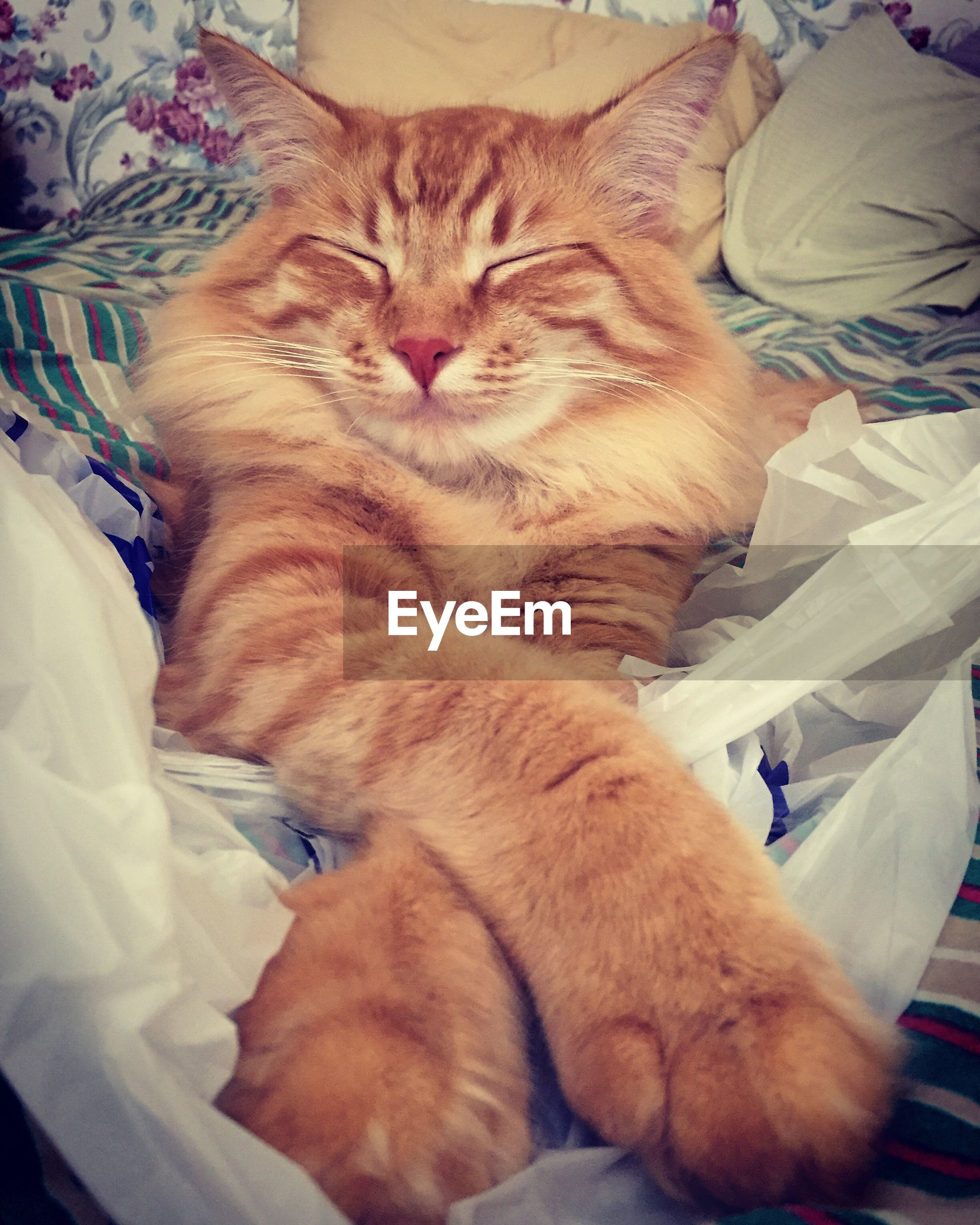 pets, domestic cat, domestic animals, cat, animal themes, bed, mammal, one animal, relaxation, indoors, resting, feline, sleeping, lying down, comfortable, at home, close-up, cozy, sheet, whisker, animal, napping, laziness, zoology, bedding, ginger cat, lying on back