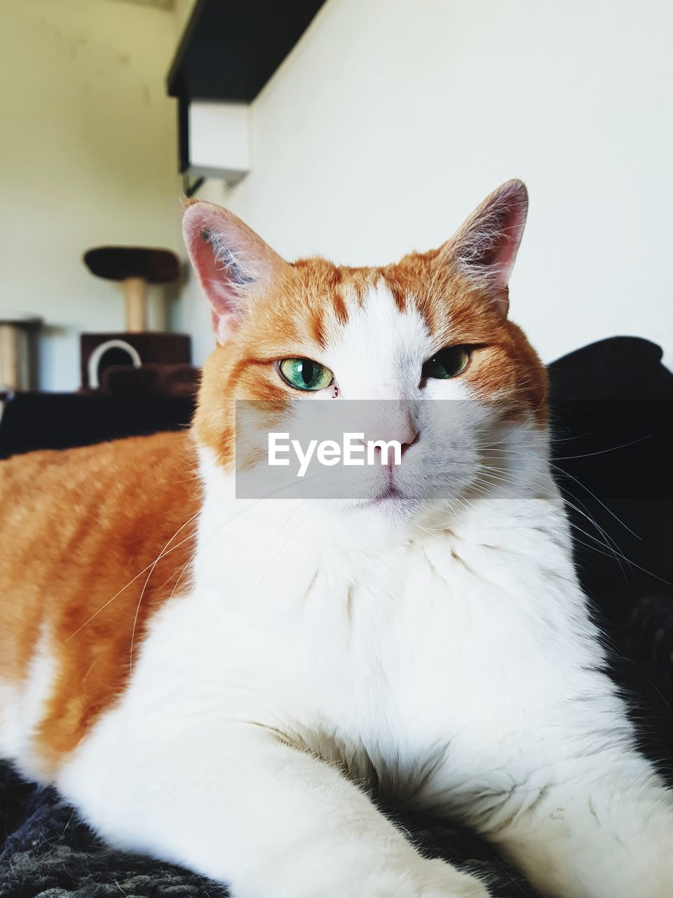 pets, domestic, domestic cat, domestic animals, cat, animal themes, feline, animal, one animal, mammal, vertebrate, indoors, portrait, close-up, no people, looking at camera, relaxation, whisker, home interior, focus on foreground, animal head, yellow eyes