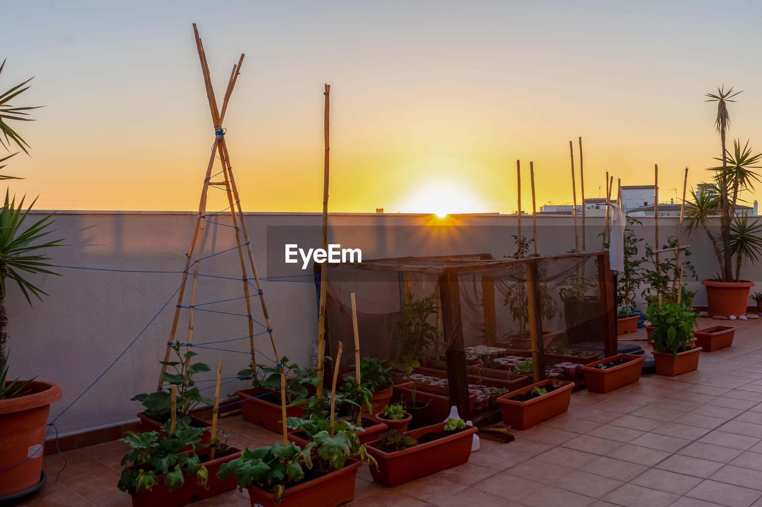 POTTED PLANTS AGAINST ORANGE SKY DURING SUNSET