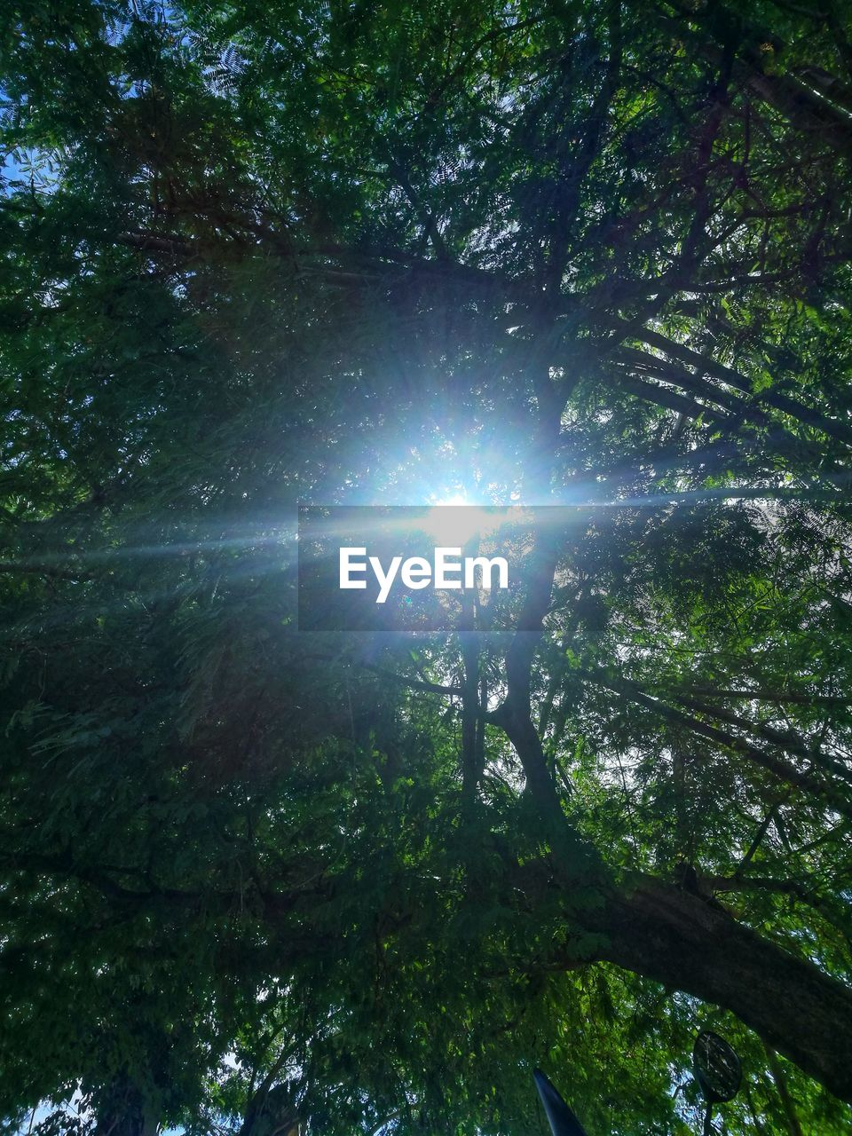 tree, plant, lens flare, sunlight, low angle view, forest, growth, beauty in nature, nature, sunbeam, land, day, tranquility, sky, sun, outdoors, no people, scenics - nature, branch, tranquil scene, bright, streaming, tree canopy, solar flare, brightly lit