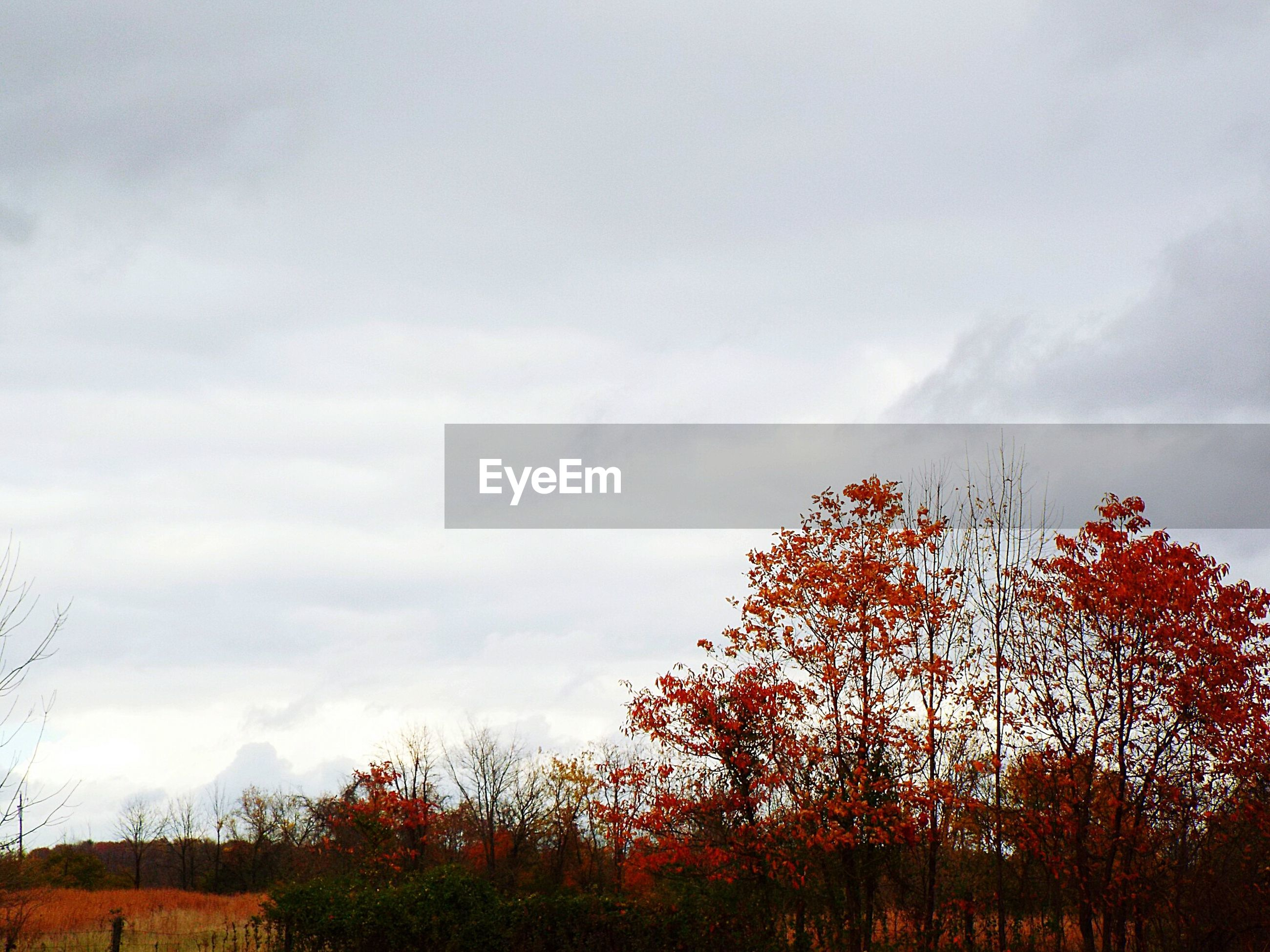 Trees growing on field against cloudy sky