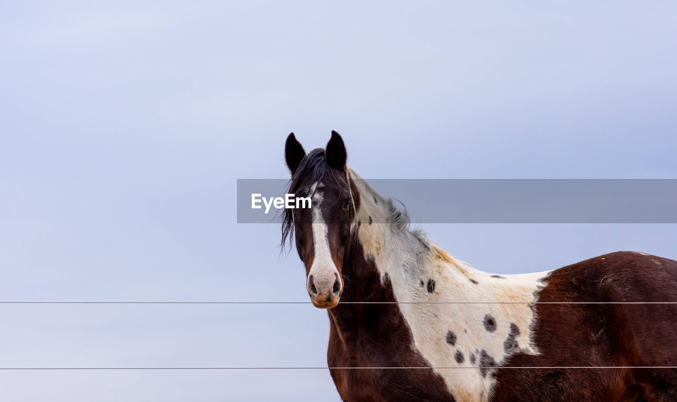 Horse standing against blue sky