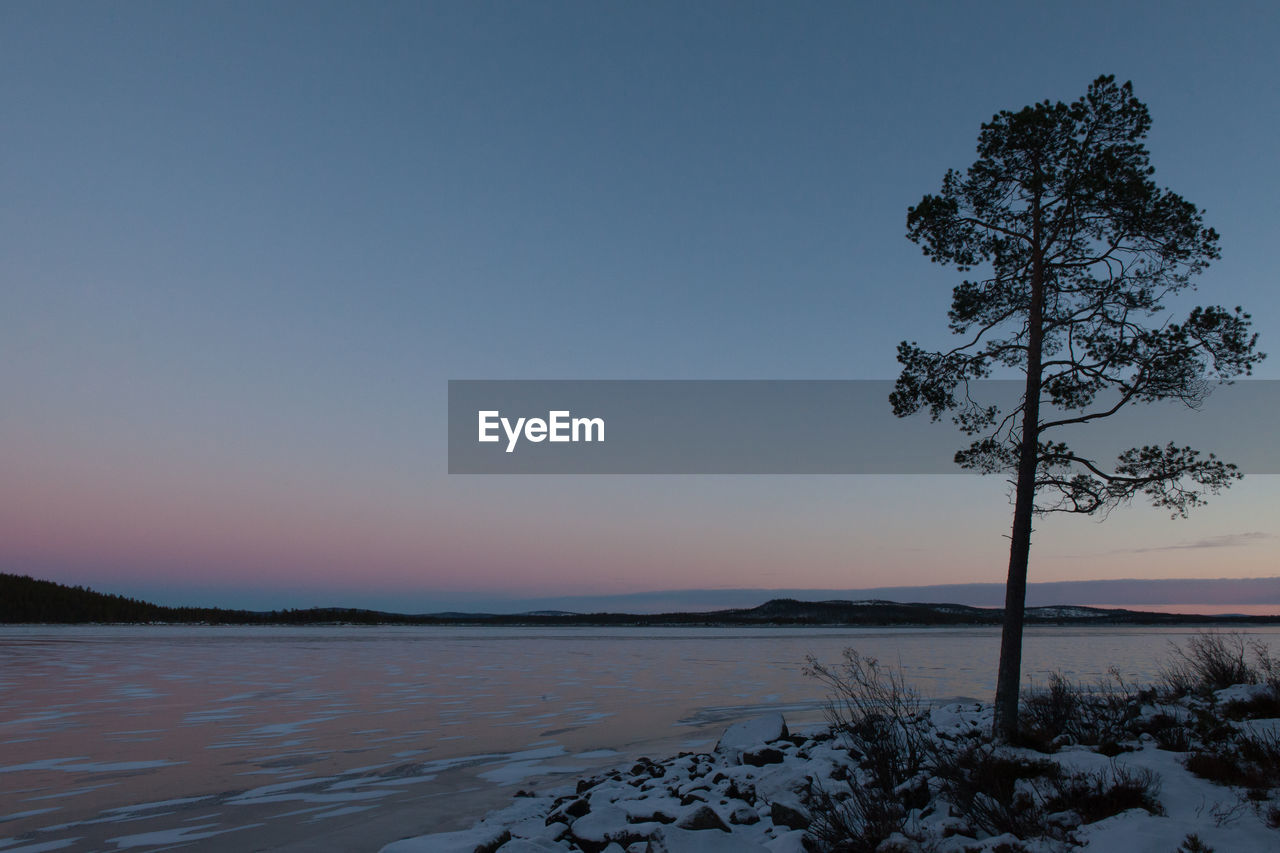 Silhouette Tree On Snow Covered Riverbank Against Clear Sky At Dusk