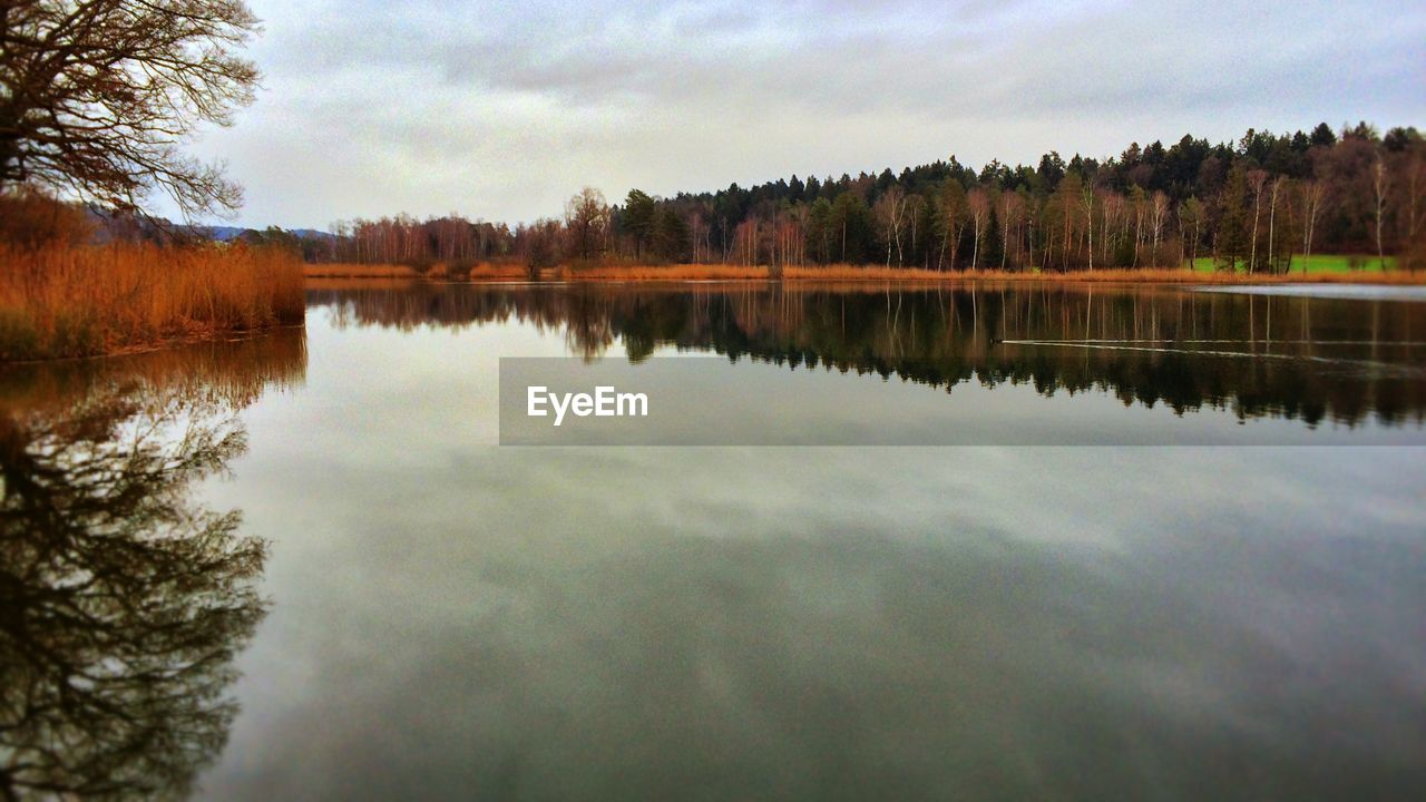 reflection, tree, water, lake, nature, sky, beauty in nature, tranquil scene, tranquility, scenics, outdoors, standing water, no people, forest, cloud - sky, day