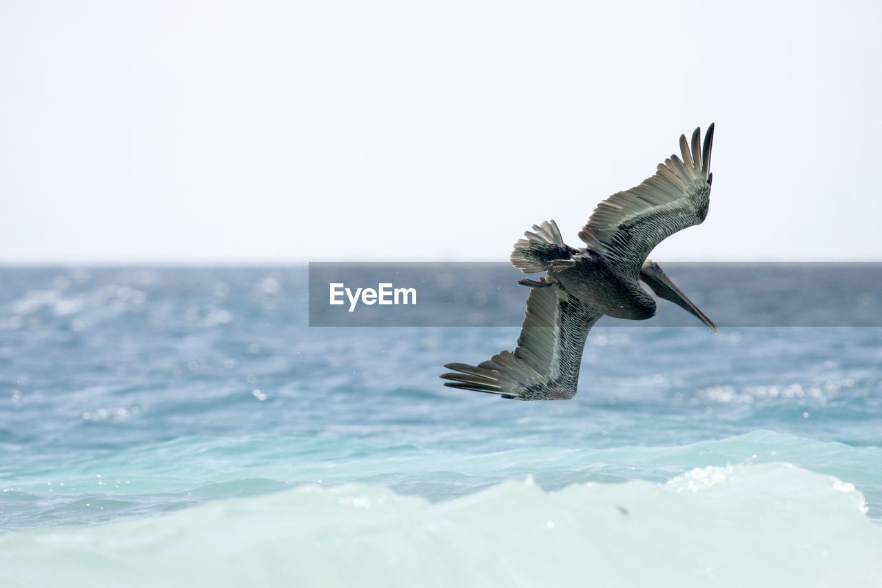 water, sea, sky, bird, animal, vertebrate, animals in the wild, spread wings, animal themes, animal wildlife, flying, horizon, horizon over water, clear sky, nature, one animal, waterfront, beauty in nature, no people, outdoors, seagull