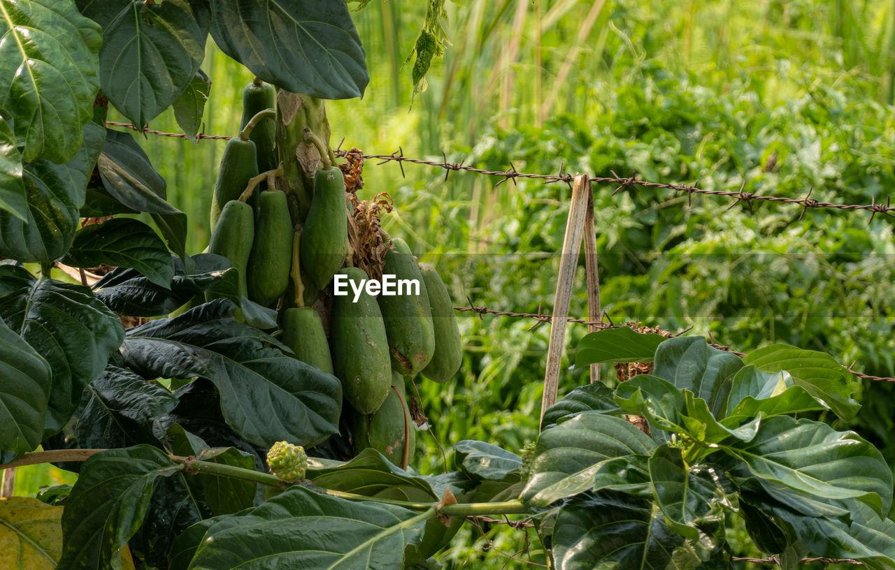 VIEW OF FRESH GREEN PLANTS