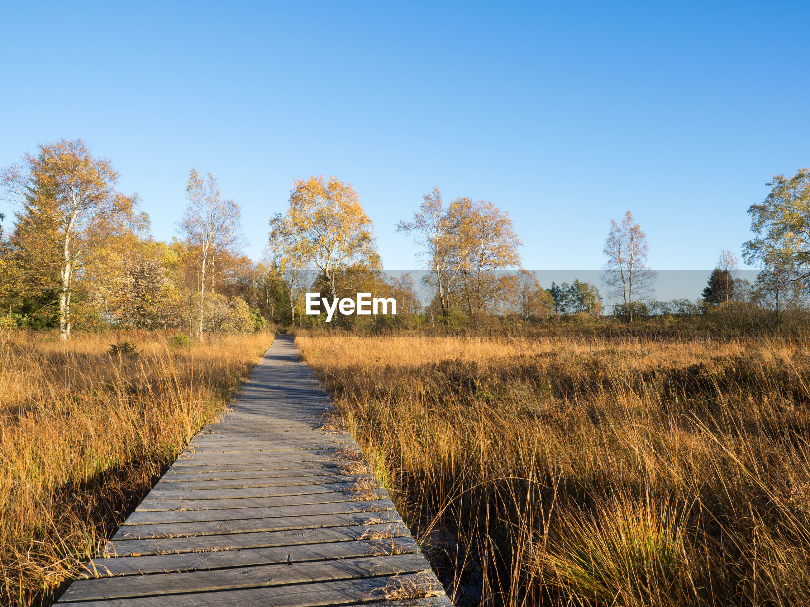 BOARDWALK AMIDST TREES AGAINST SKY DURING AUTUMN