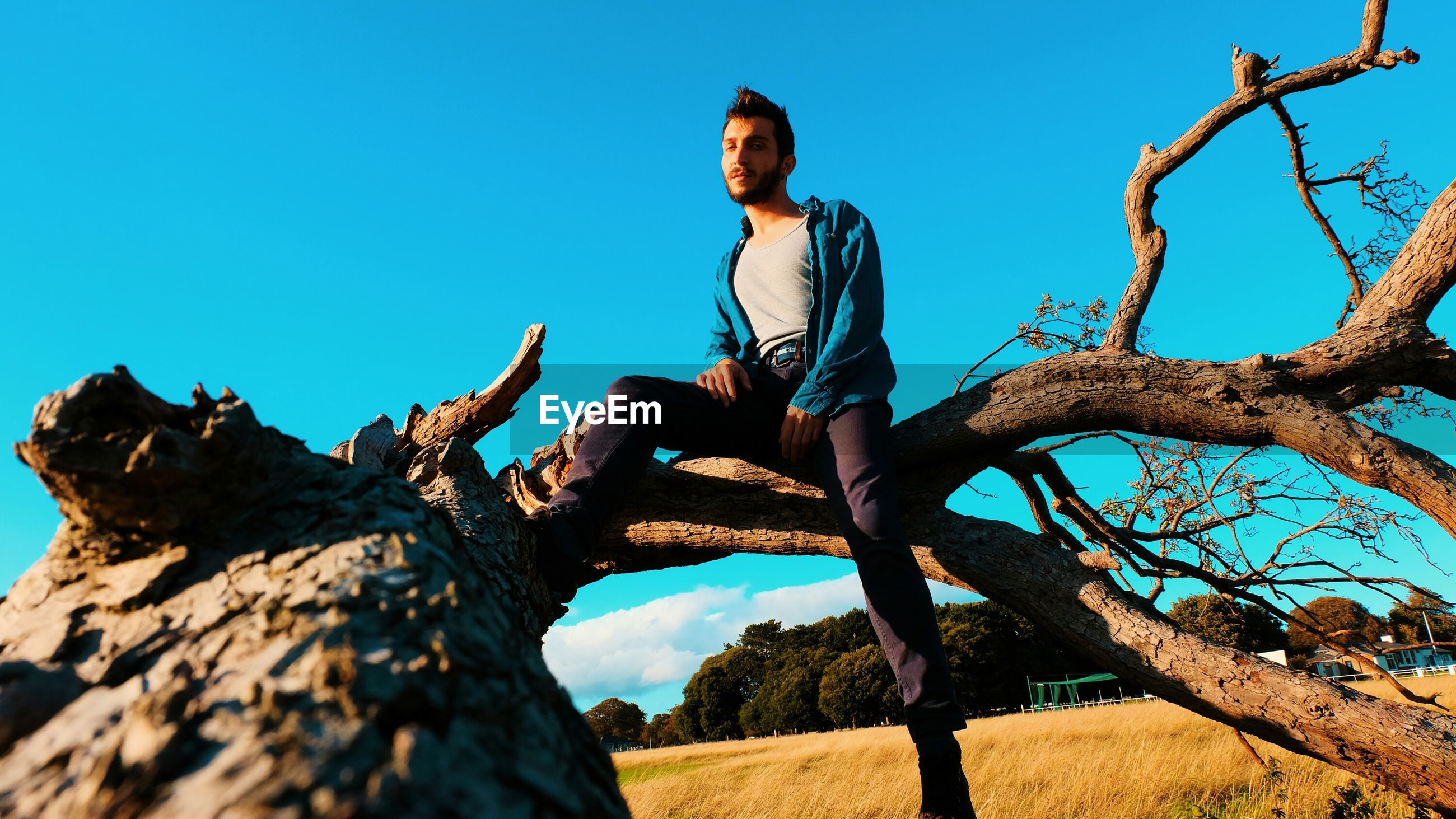 Low angle view of man sitting on fallen tree against clear blue sky