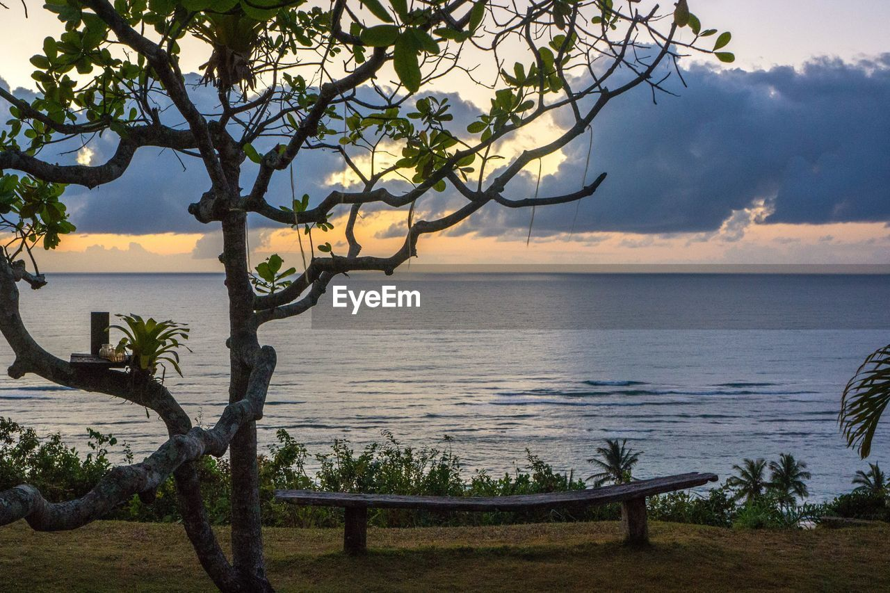 tree, sea, water, nature, horizon over water, scenics, beauty in nature, branch, tranquility, tranquil scene, sky, tree trunk, foreground, outdoors, growth, sunset, no people, day, rope swing
