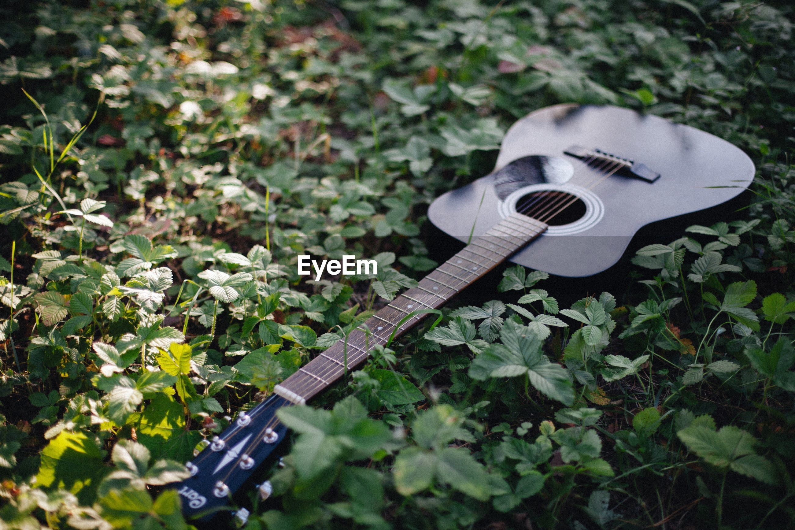 CLOSE-UP OF GUITAR ON PLANTS