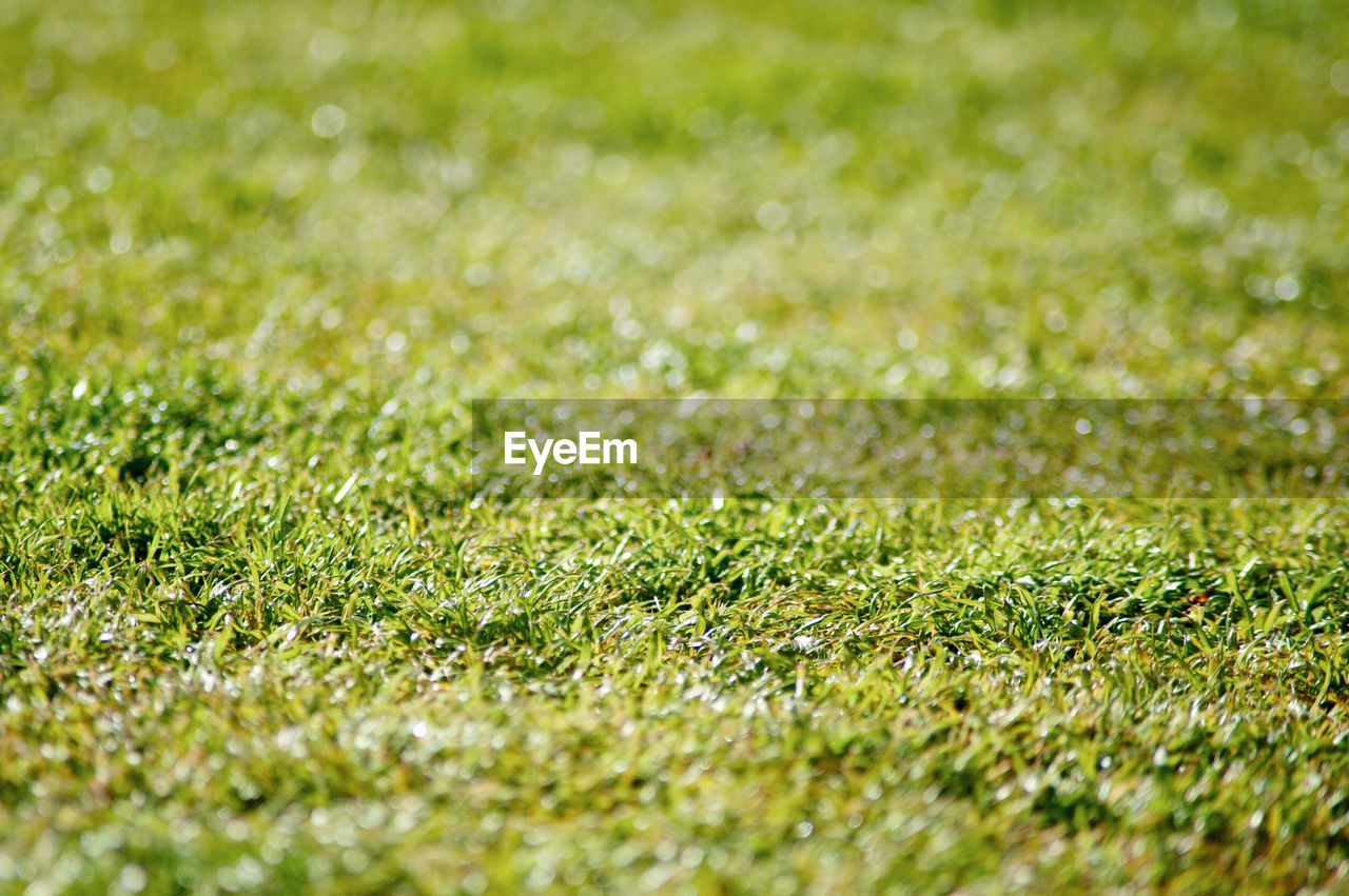 grass, plant, green color, full frame, selective focus, field, backgrounds, land, beauty in nature, nature, no people, day, growth, tranquility, outdoors, close-up, sunlight, environment, landscape, textured