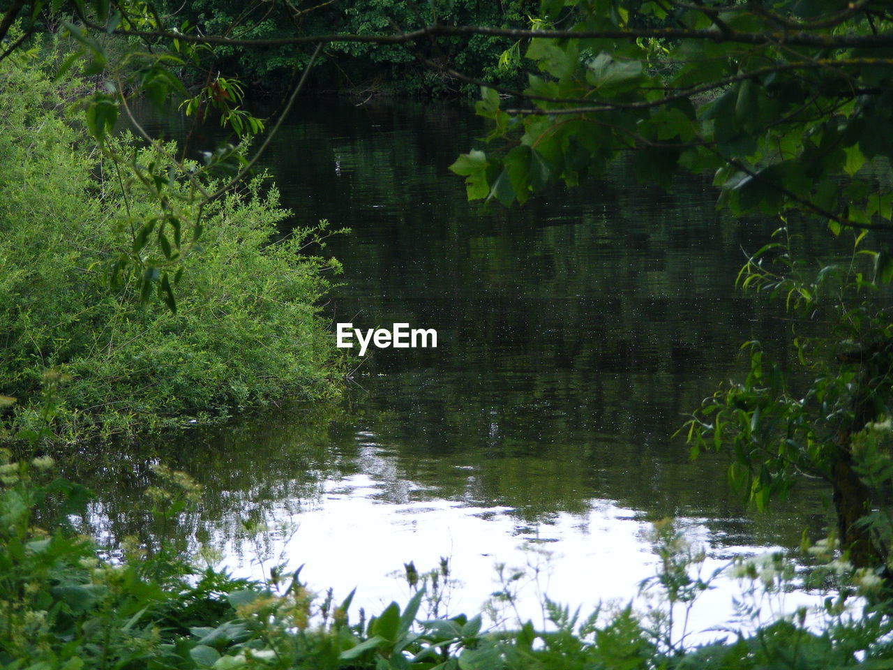 growth, nature, plant, reflection, forest, vegetation, outdoors, foliage, adventure, no people, tree, water, day