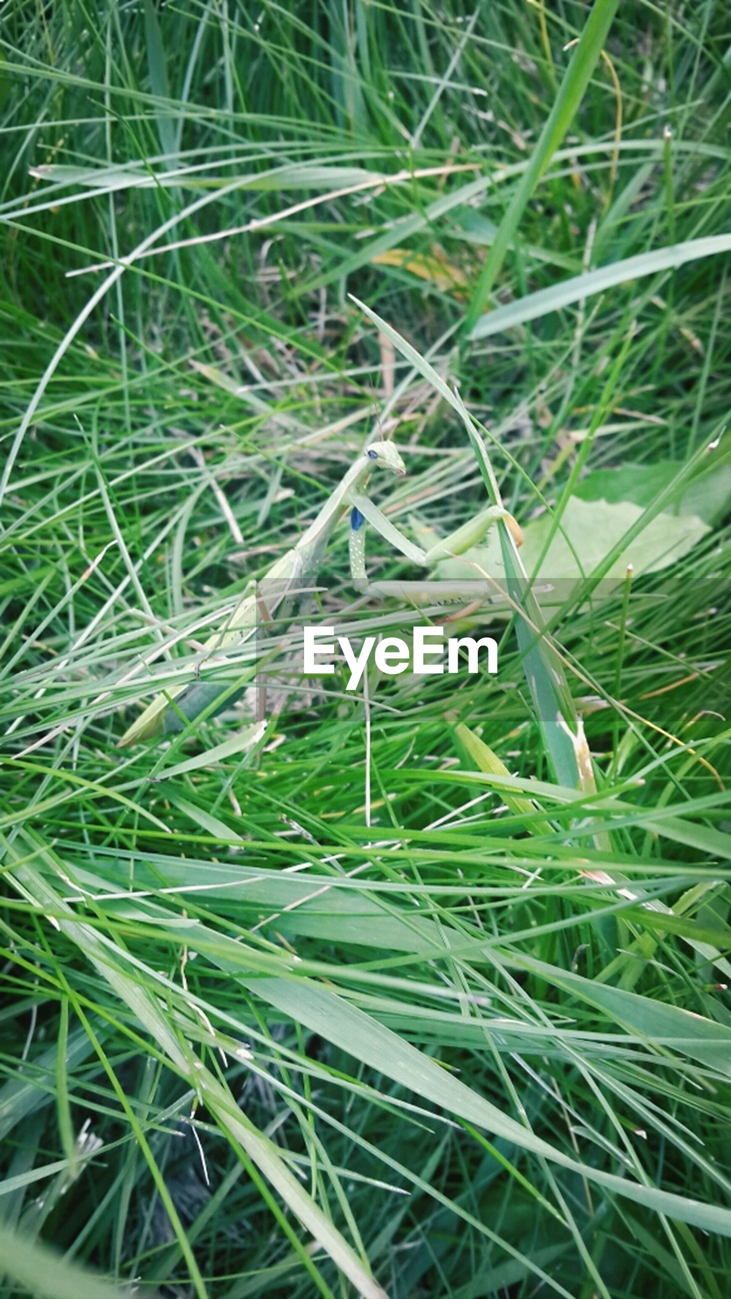 grass, growth, green color, blade of grass, plant, nature, field, close-up, beauty in nature, drop, freshness, backgrounds, wet, full frame, day, water, outdoors, dew, growing, tranquility