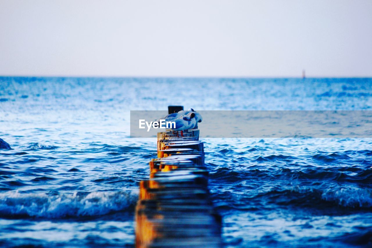 water, sea, horizon over water, horizon, sky, clear sky, waterfront, day, scenics - nature, blue, selective focus, beauty in nature, nature, vertebrate, animal, animal themes, animal wildlife, animals in the wild, real people, outdoors