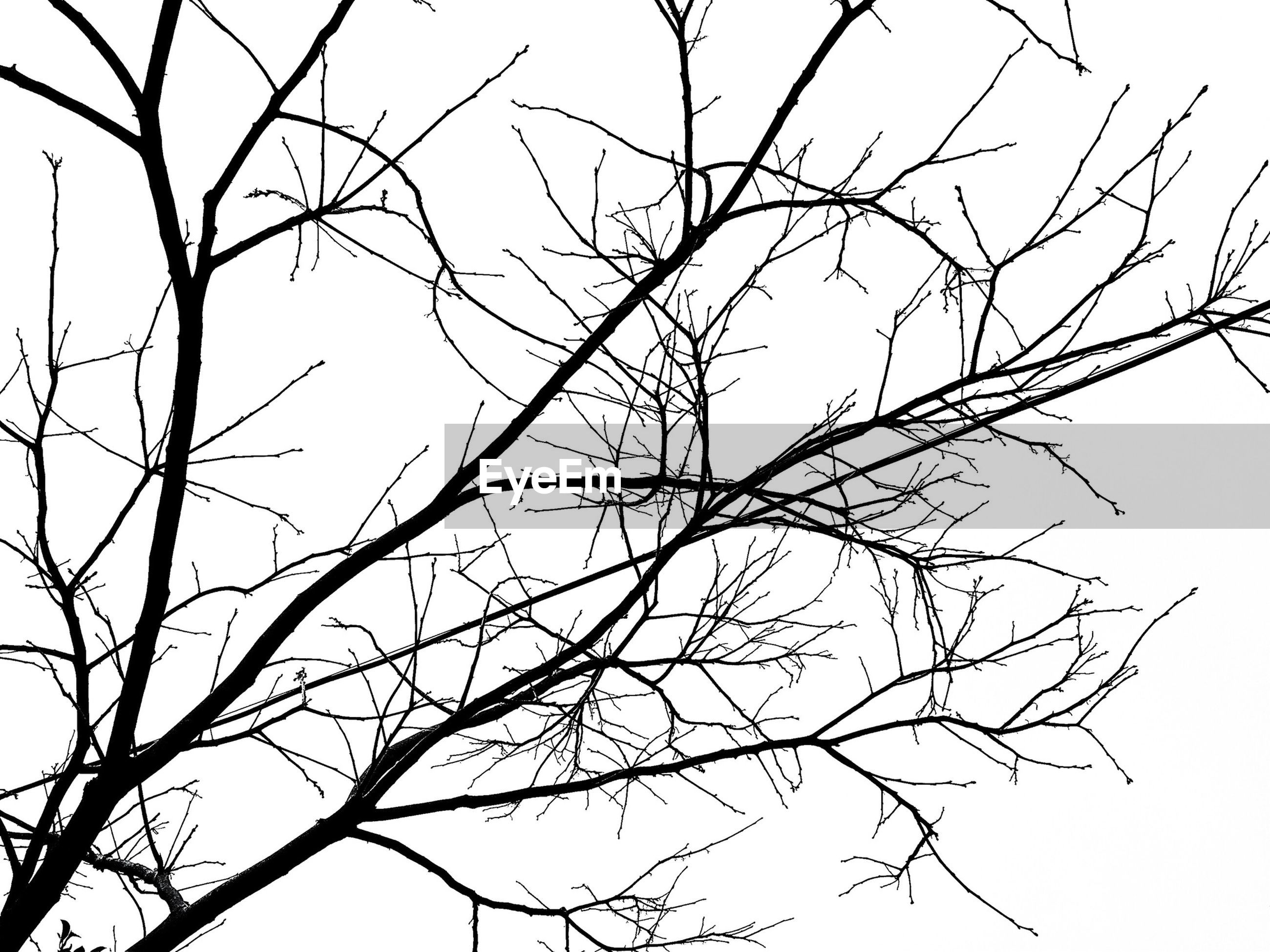 branch, bare tree, tree, low angle view, clear sky, tranquility, nature, beauty in nature, sky, scenics, outdoors, no people, twig, day, dead plant, tranquil scene, growth, silhouette, backgrounds, dried plant
