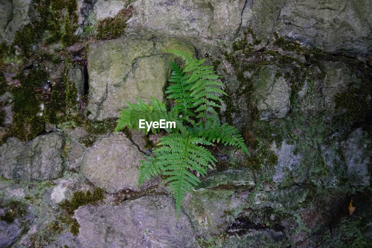 growth, nature, tree, tree trunk, green color, moss, no people, plant, day, outdoors, beauty in nature, tranquility, scenics, forest, close-up