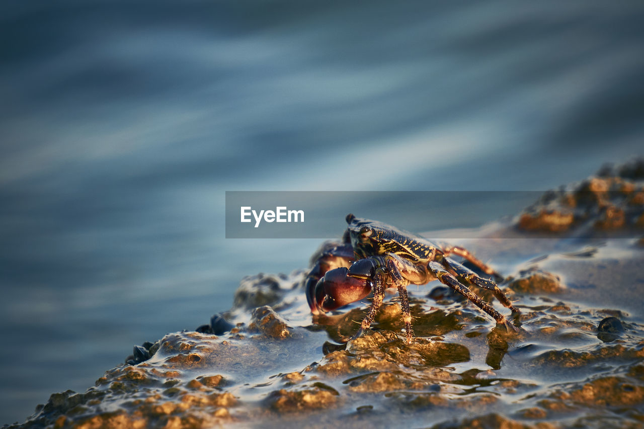 animals in the wild, animal wildlife, animal themes, animal, one animal, invertebrate, insect, solid, close-up, nature, day, rock, rock - object, selective focus, crab, no people, outdoors, sea, water, beauty in nature, marine