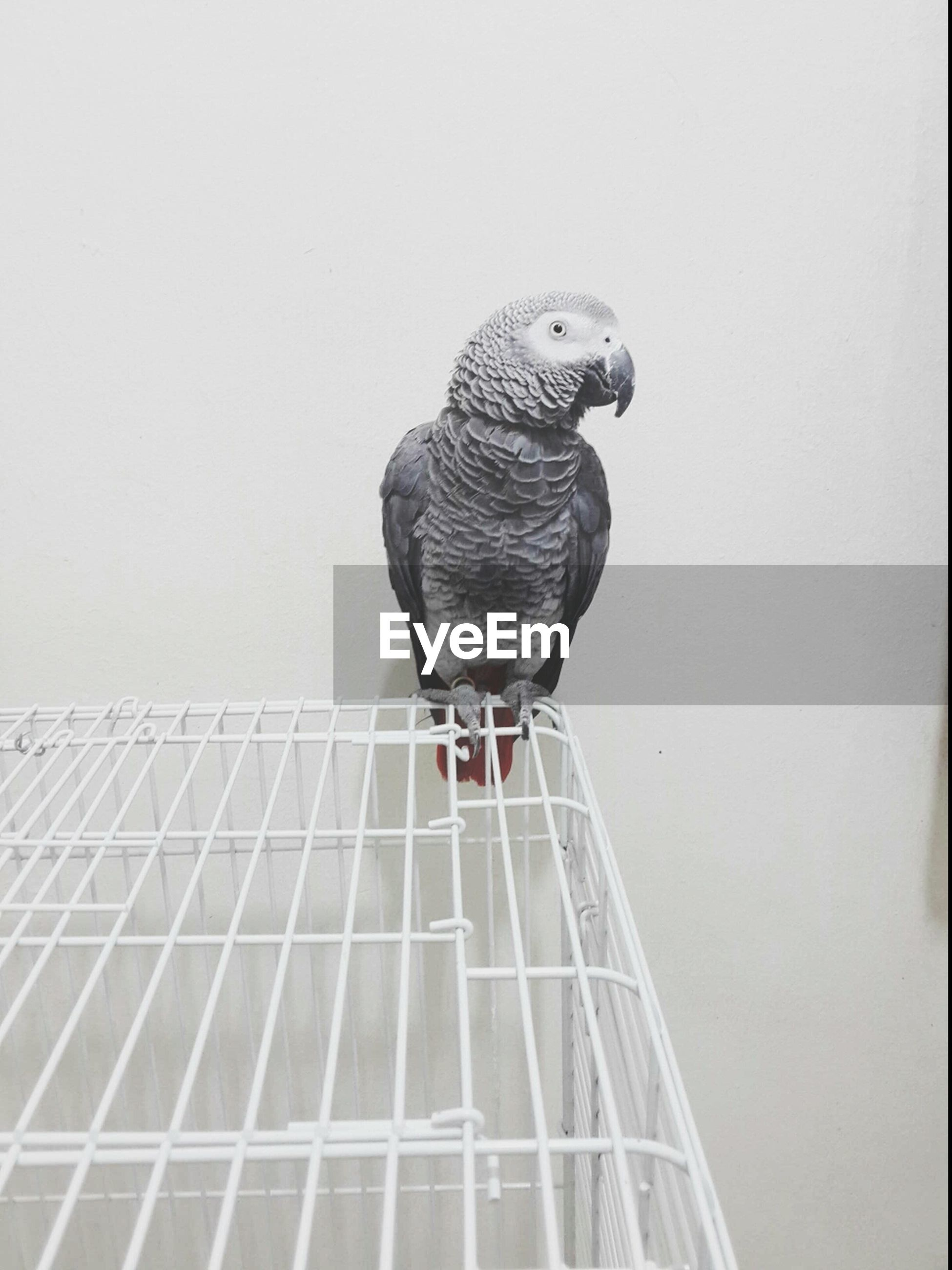 one animal, bird, animal themes, low angle view, copy space, clear sky, built structure, architecture, animals in the wild, wildlife, perching, day, building exterior, no people, outdoors, full length, metal, wall - building feature, close-up, art and craft