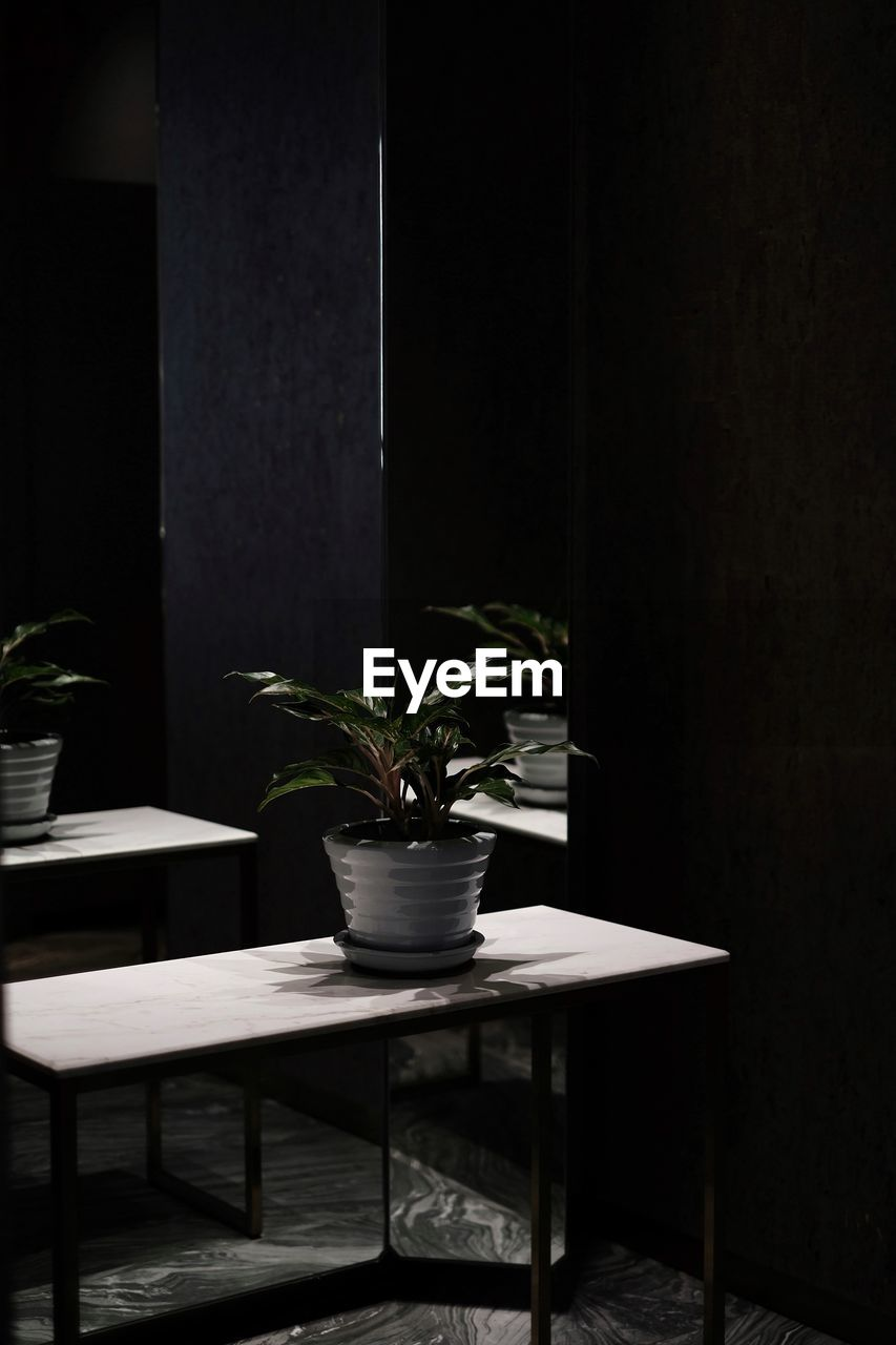 POTTED PLANTS ON TABLE IN ROOM