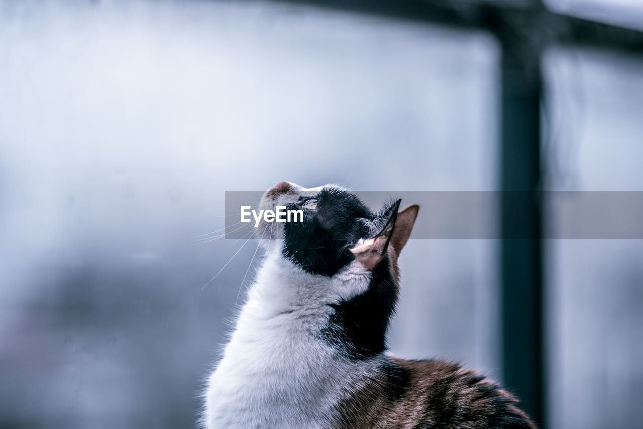 Profile View Of Cat