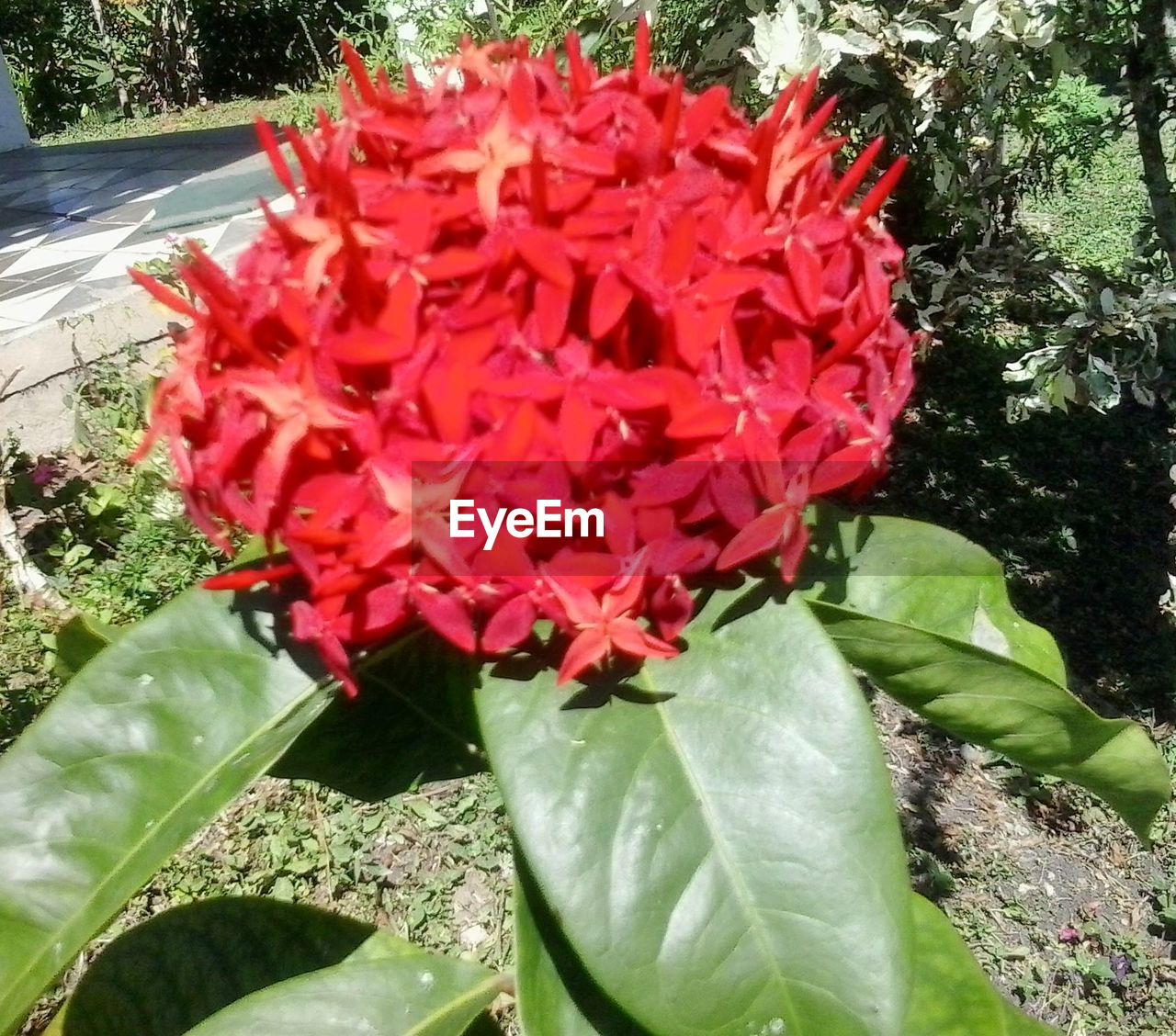flower, growth, nature, beauty in nature, petal, red, leaf, freshness, fragility, plant, day, outdoors, flower head, no people, close-up, blooming, water