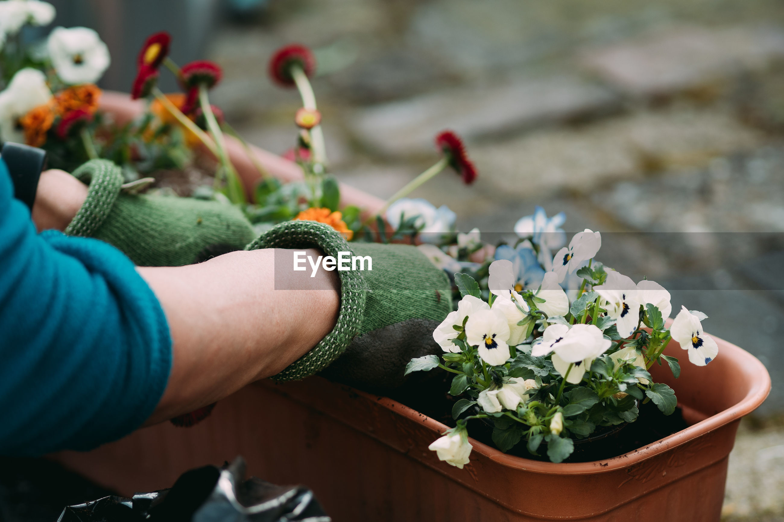 Cropped hands planting plants in pot