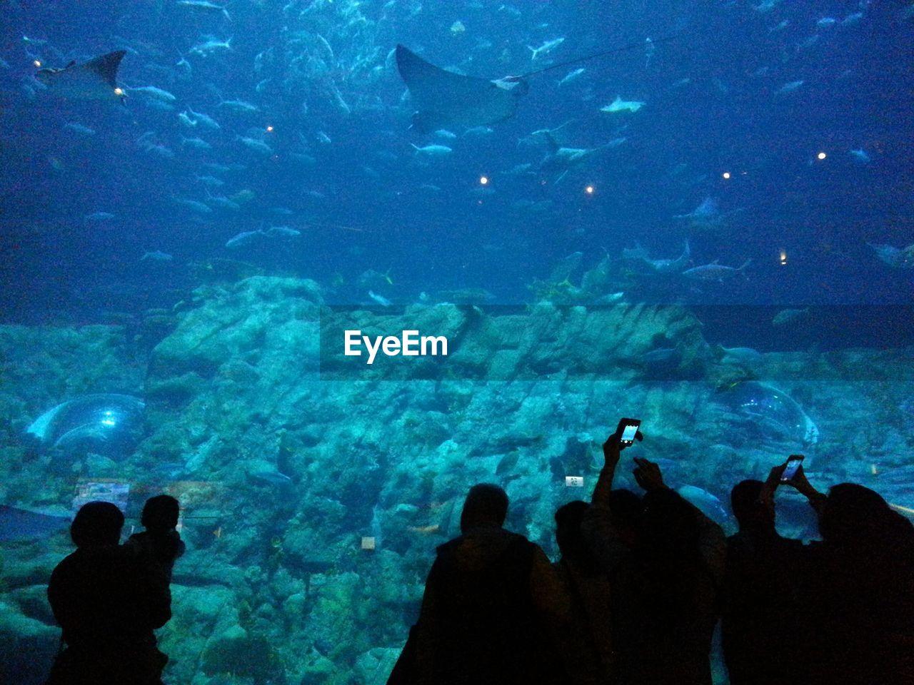 Silhouette People Looking At Sea Life In Ocean Park Hong Kong