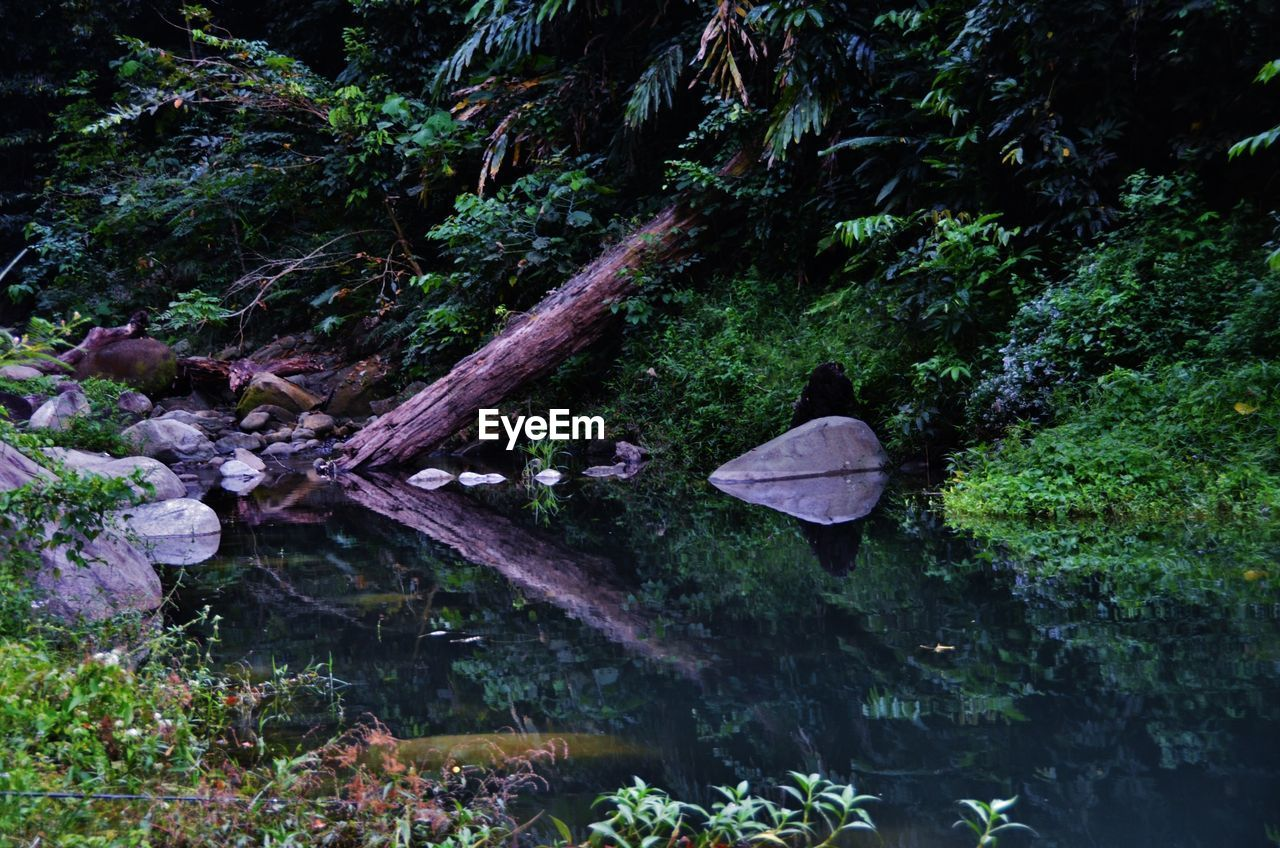 Pond in forest
