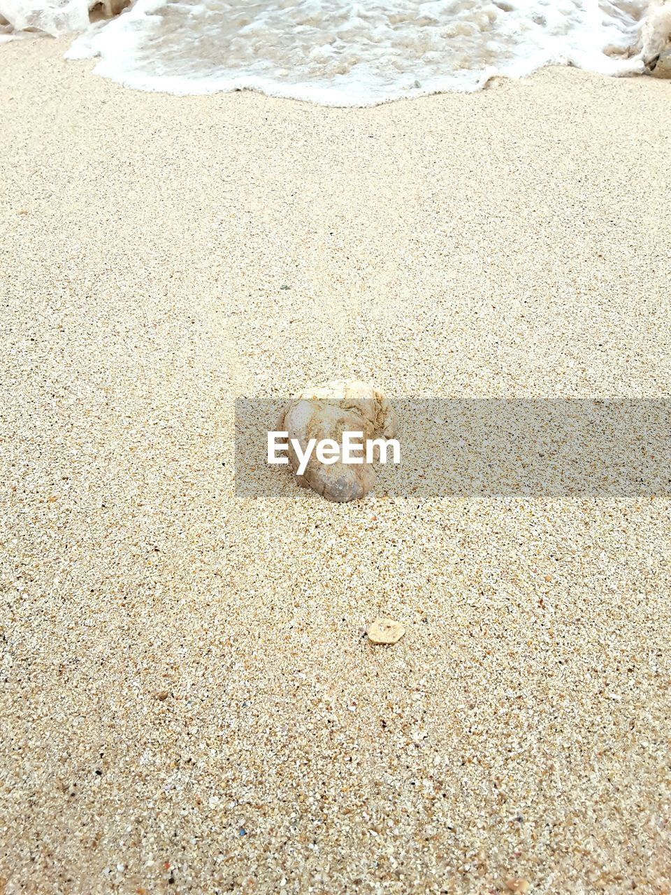 sand, beach, one animal, shore, high angle view, nature, animal themes, day, outdoors, no people, sea, dog, animals in the wild, pets, mammal, domestic animals, water