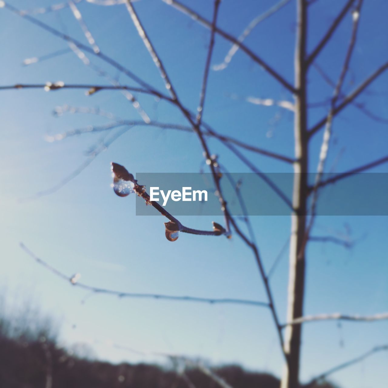 focus on foreground, nature, day, no people, animals in the wild, one animal, branch, animal themes, tree, beauty in nature, outdoors, animal wildlife, close-up, sky