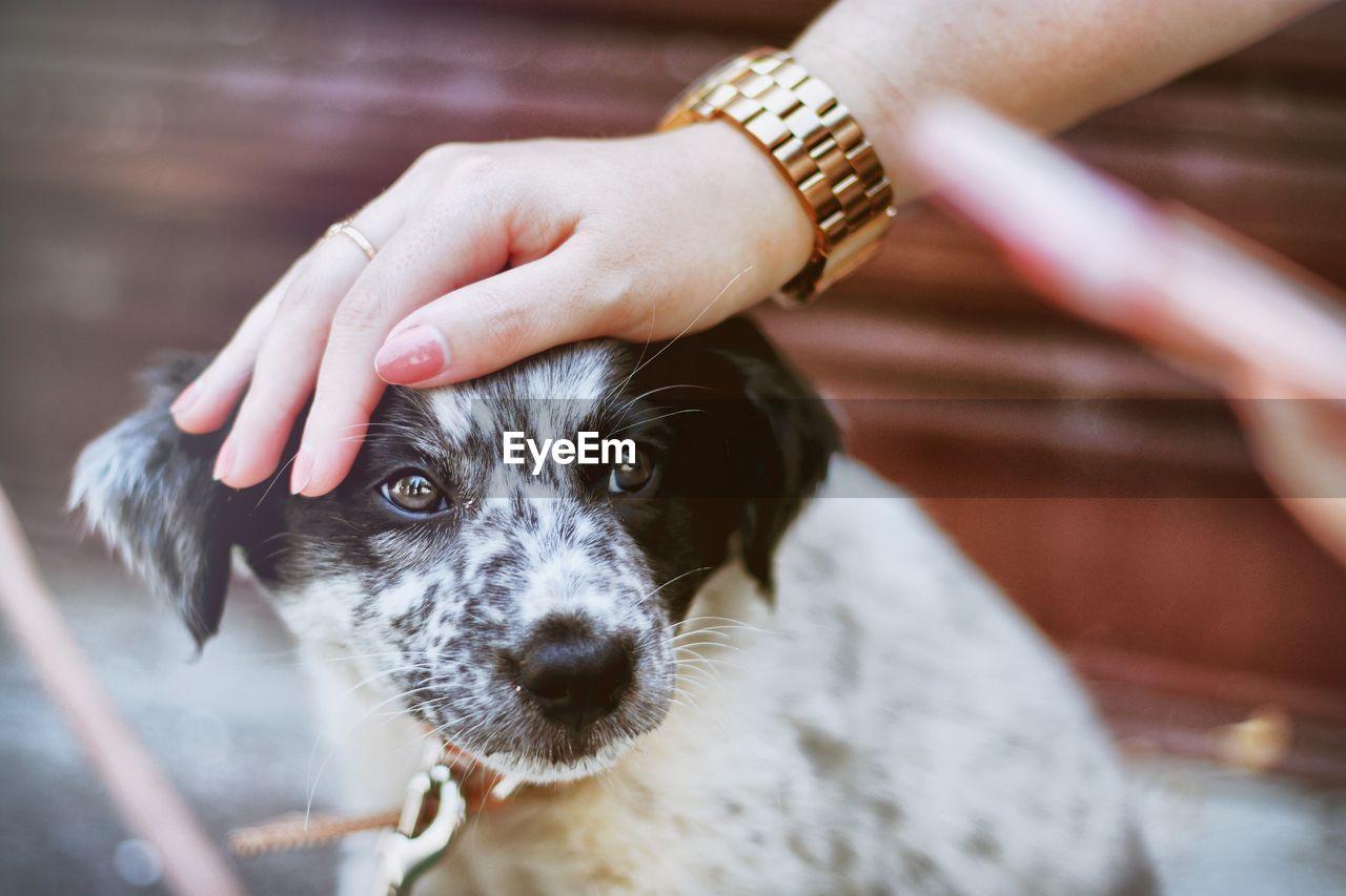 Cropped Hand Patting Dog