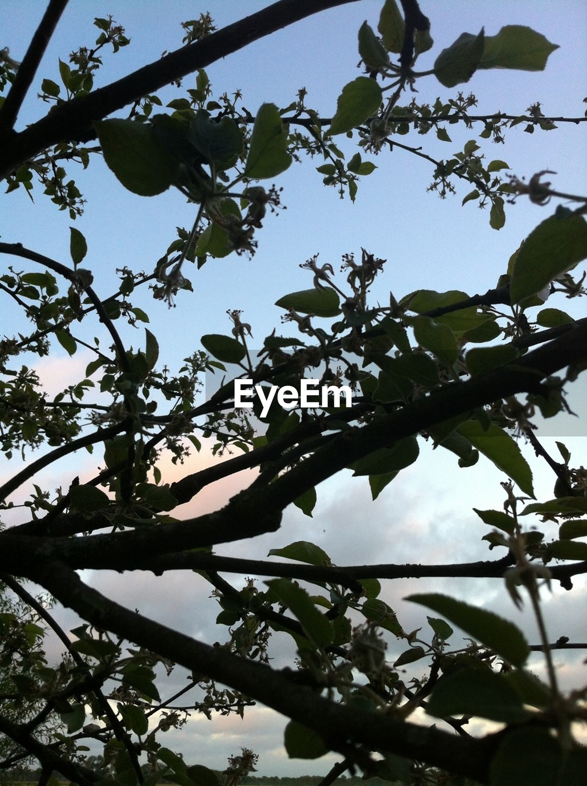low angle view, branch, tree, sky, growth, leaf, nature, clear sky, beauty in nature, day, outdoors, no people, twig, high section, directly below, sunlight, close-up, blue, tranquility, focus on foreground