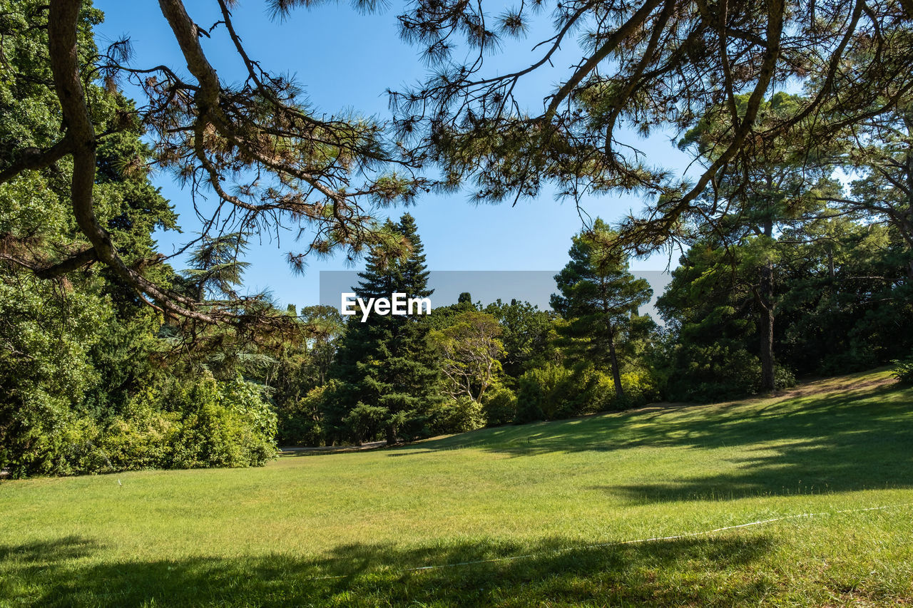 plant, tree, green color, tranquility, beauty in nature, grass, growth, tranquil scene, sky, land, nature, day, no people, scenics - nature, landscape, environment, non-urban scene, sunlight, clear sky, field, outdoors, pine tree, coniferous tree