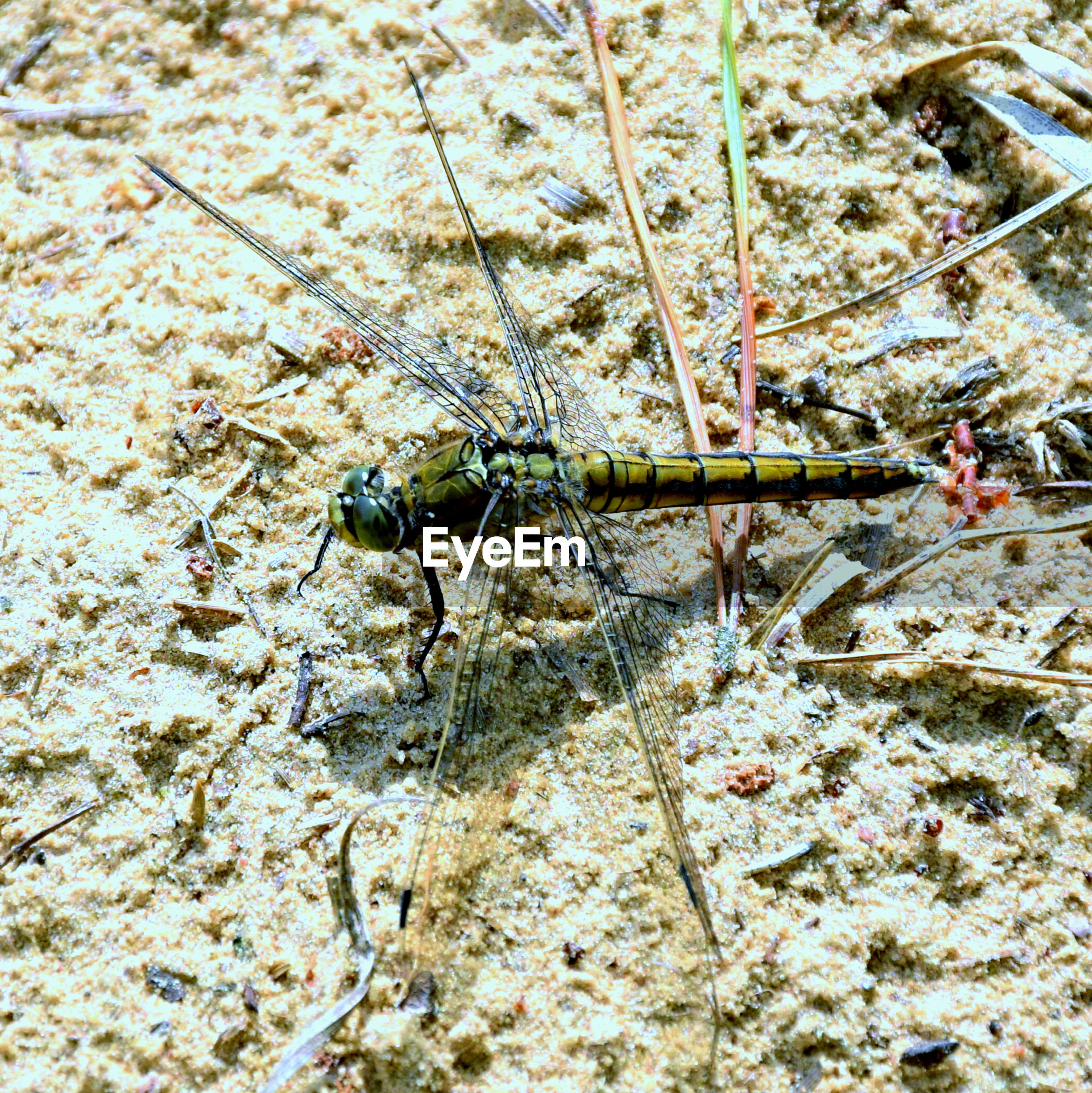 Close-up of dragonfly on field
