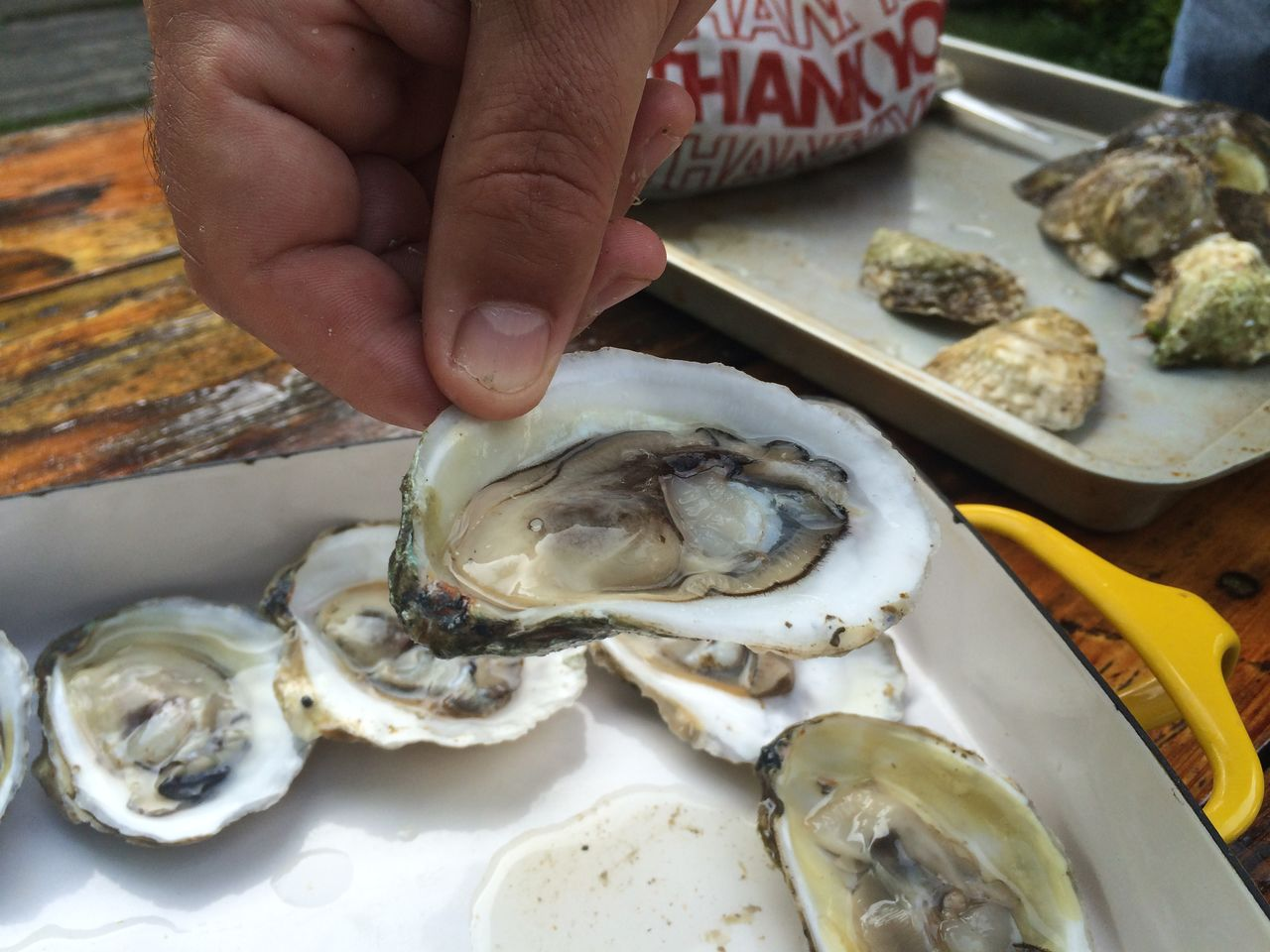 Close-up of cropped hand holding oyster