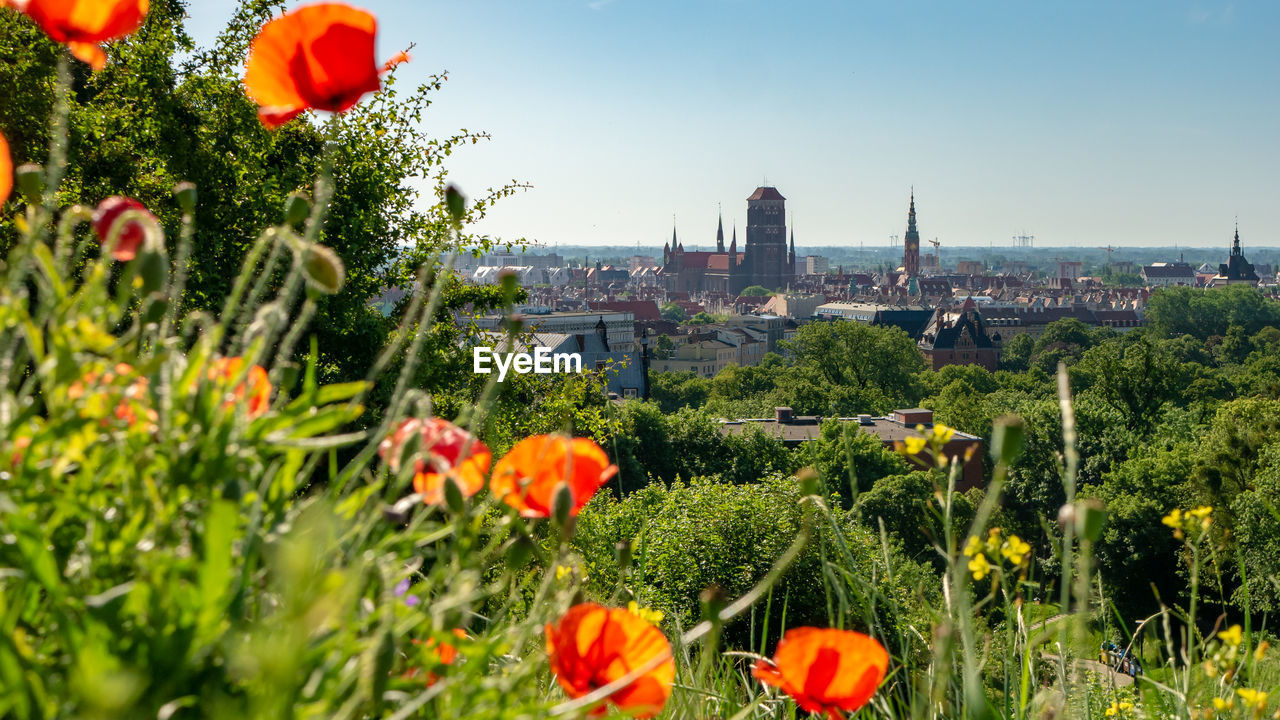 plant, flowering plant, architecture, flower, building exterior, built structure, growth, nature, freshness, beauty in nature, fragility, city, vulnerability, sky, building, day, no people, tree, field, green color, outdoors, cityscape, flower head