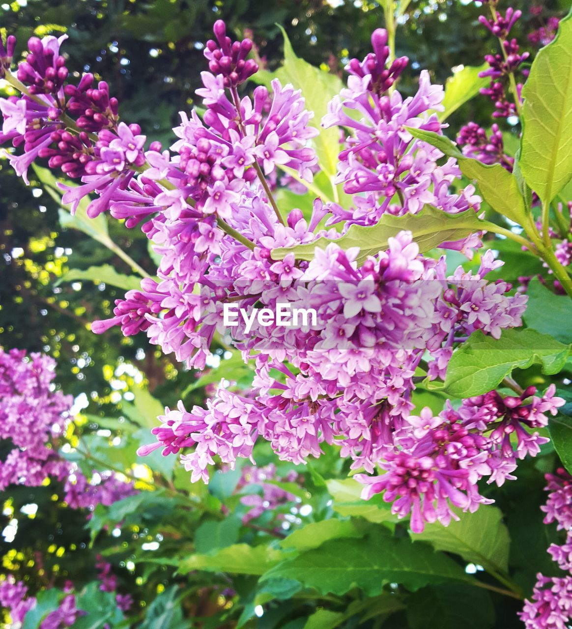 growth, beauty in nature, flower, nature, fragility, freshness, plant, pink color, outdoors, no people, petal, day, springtime, leaf, blooming, lilac, close-up, branch, tree, flower head