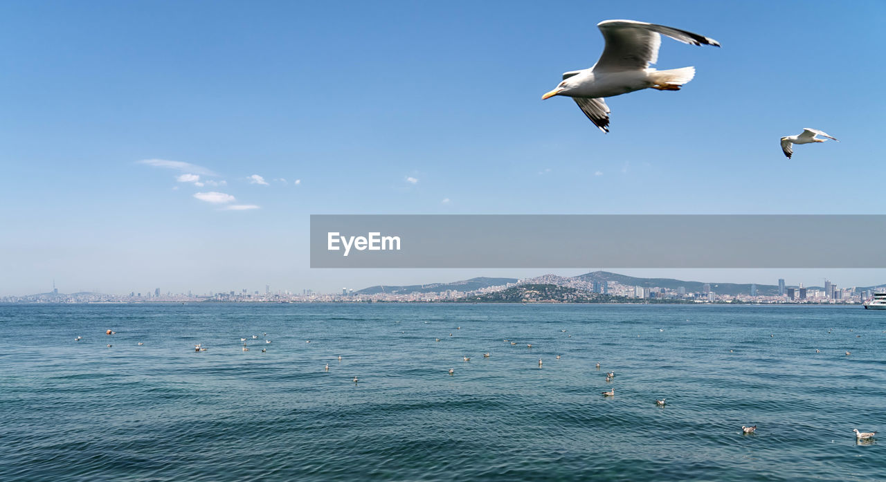 animal themes, vertebrate, bird, animal wildlife, animals in the wild, animal, water, flying, sea, sky, spread wings, waterfront, beauty in nature, one animal, mid-air, seagull, nature, day, scenics - nature, no people, outdoors