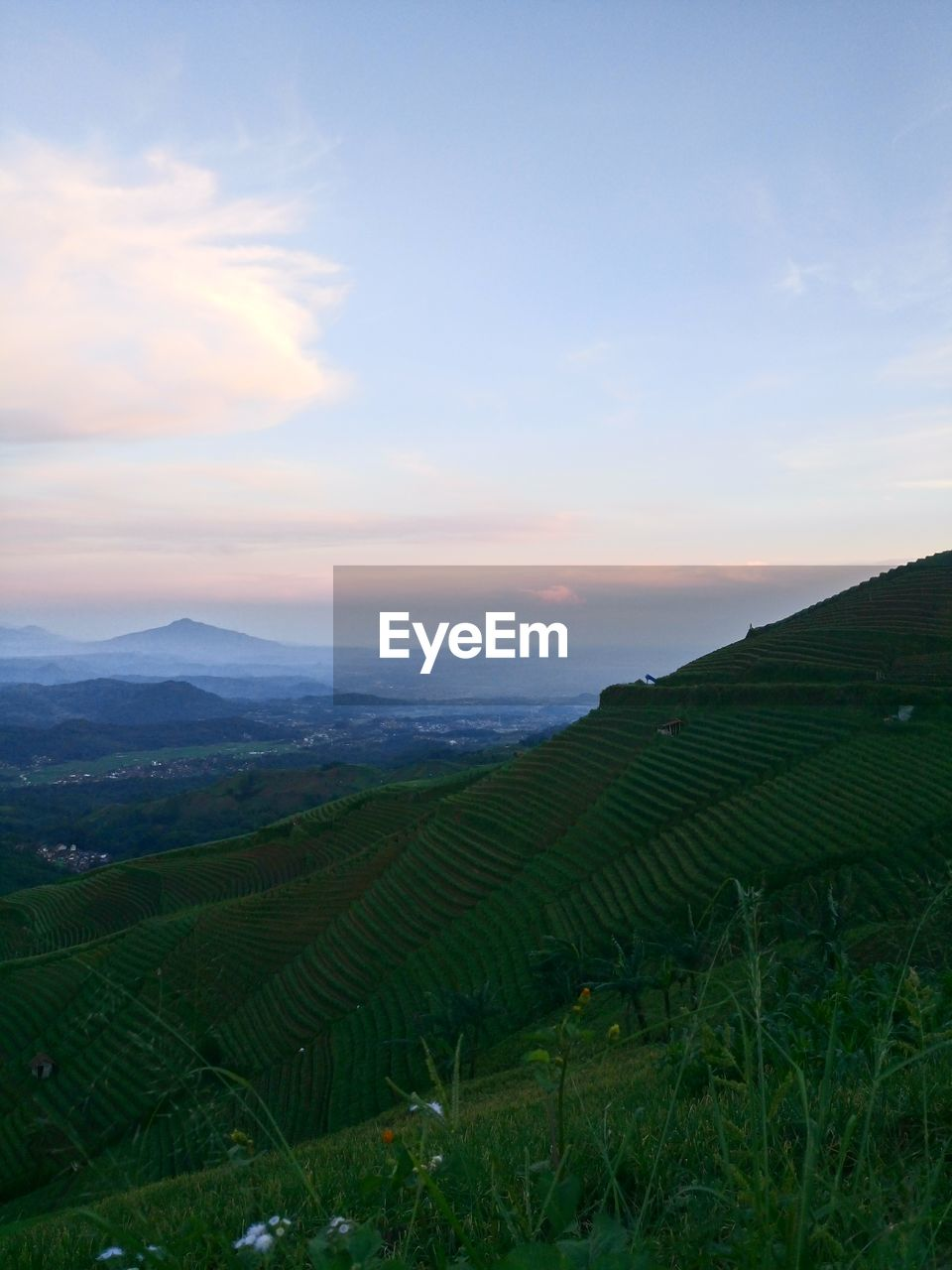scenics - nature, beauty in nature, landscape, environment, agriculture, tranquil scene, sky, land, rural scene, tranquility, field, plant, farm, growth, sunset, nature, no people, green color, mountain, idyllic, outdoors, plantation, tea crop