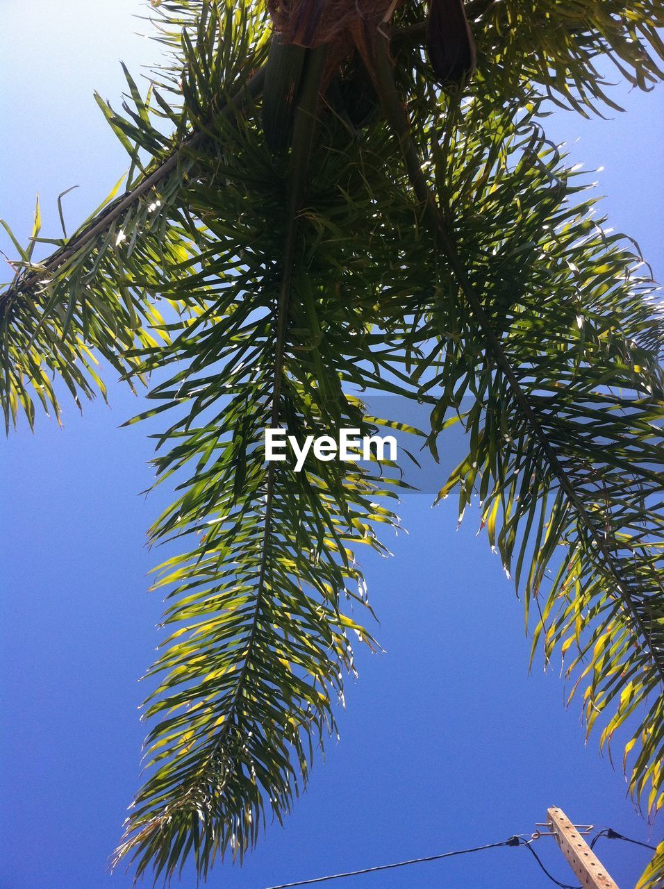 tree, plant, sky, growth, low angle view, green color, nature, day, no people, clear sky, leaf, beauty in nature, palm tree, outdoors, branch, tropical climate, plant part, sunlight, tranquility, blue, palm leaf, coniferous tree