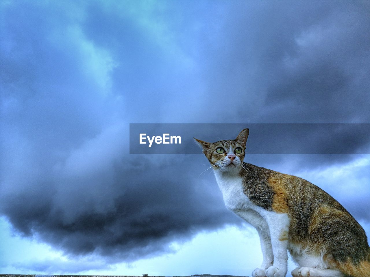 cloud - sky, domestic animals, mammal, cat, animal themes, domestic, feline, pets, animal, domestic cat, vertebrate, one animal, sky, no people, nature, low angle view, day, looking at camera, sitting, whisker