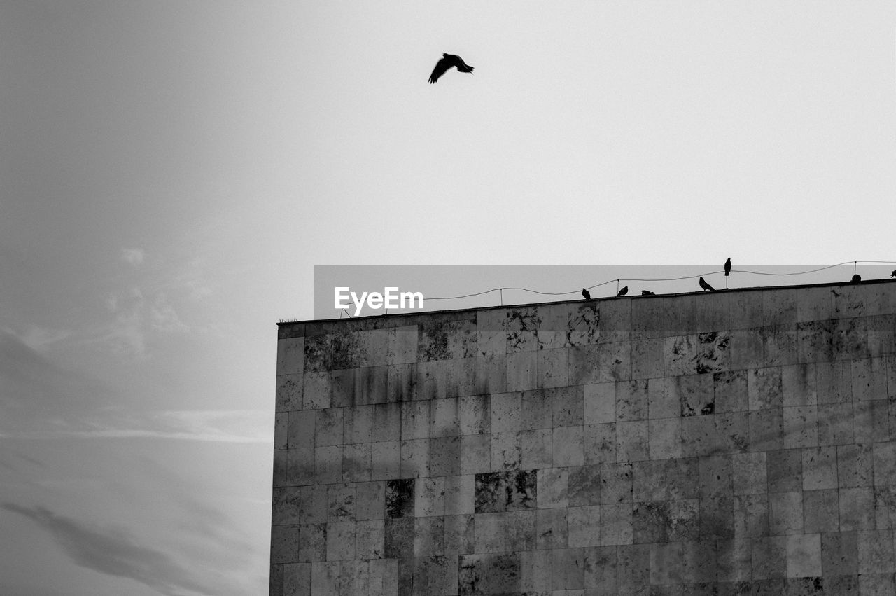 LOW ANGLE VIEW OF BIRDS FLYING AGAINST WALL