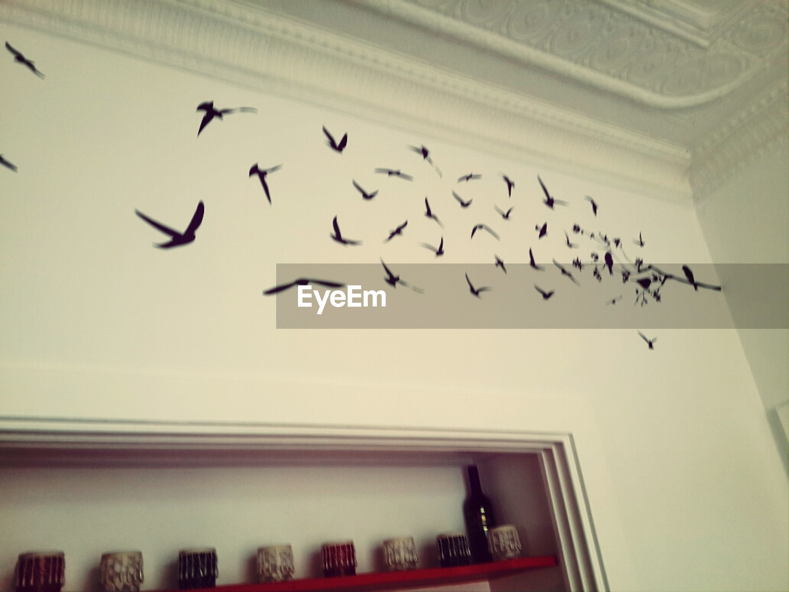 indoors, bird, flying, built structure, low angle view, flock of birds, window, text, animal themes, in a row, architecture, no people, day, western script, animals in the wild, wildlife, glass - material, ceiling, airplane